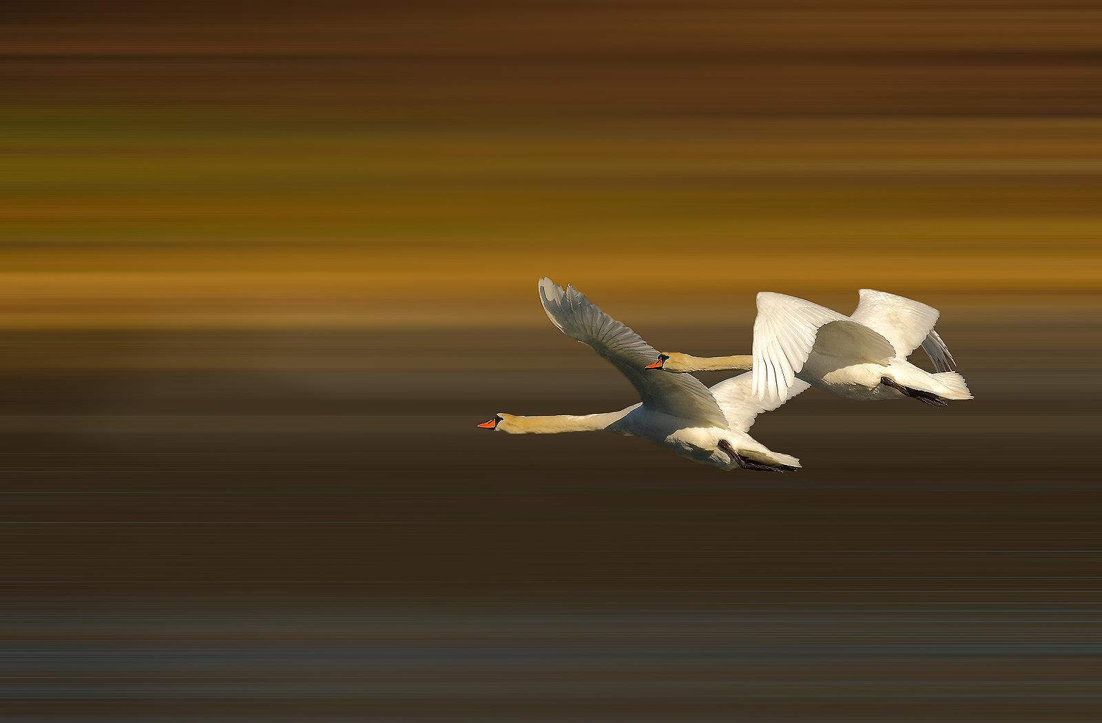 Flight infinite !!!...