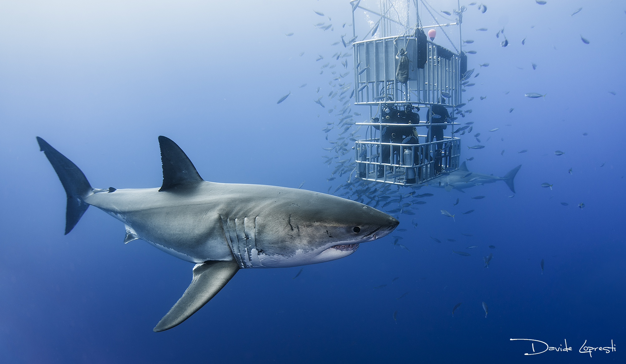 Cage diving...