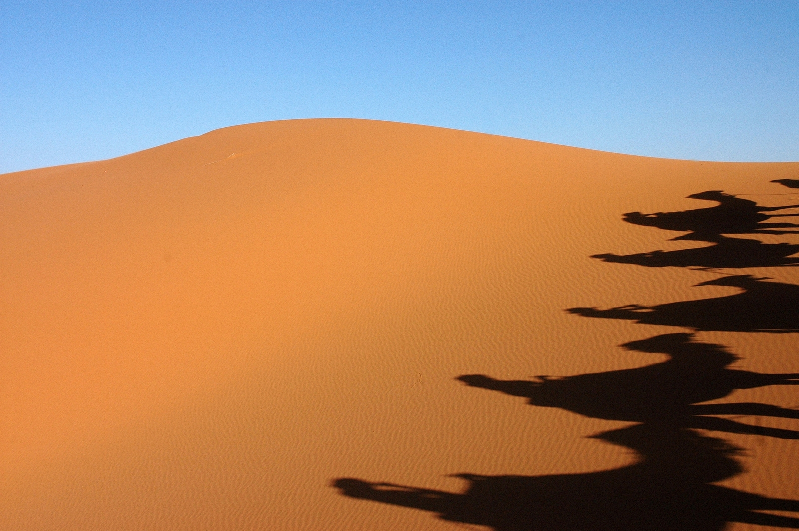 Shadows in the desert...