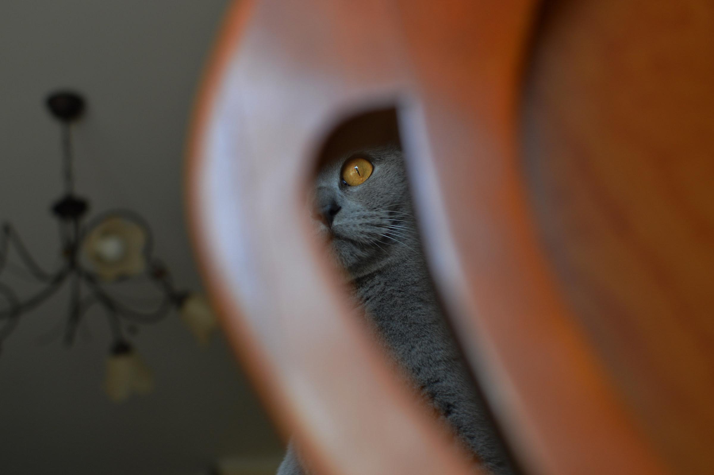 Olivia - D3200 Nikon 35mm f / 1.8...