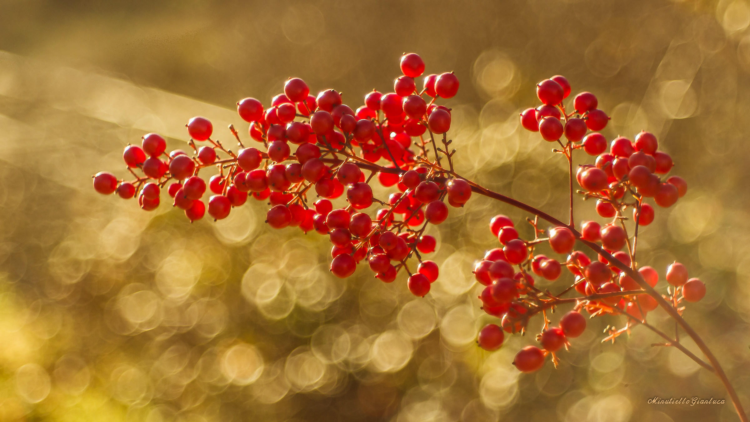 Berries and Domiplan...