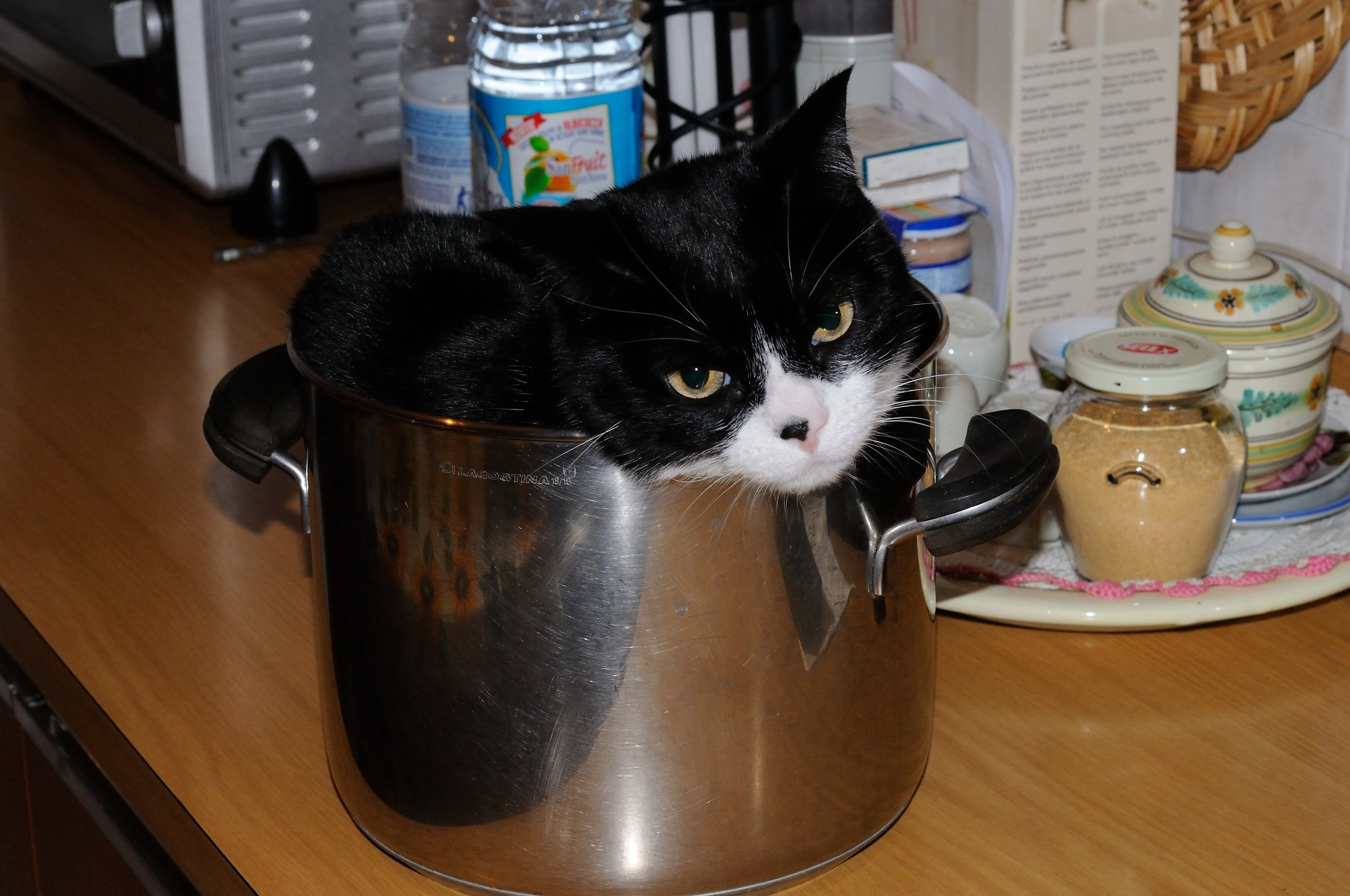There hatching cat better cooks us...