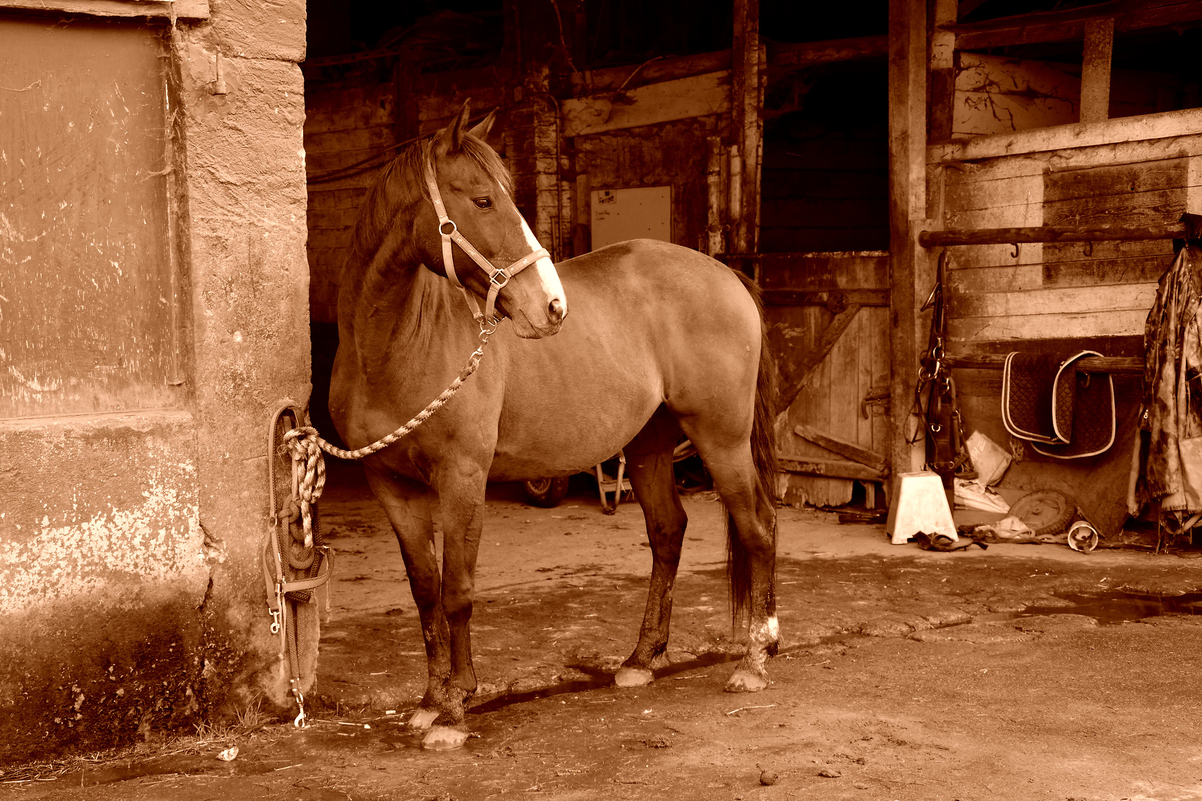 Old Style Horse...