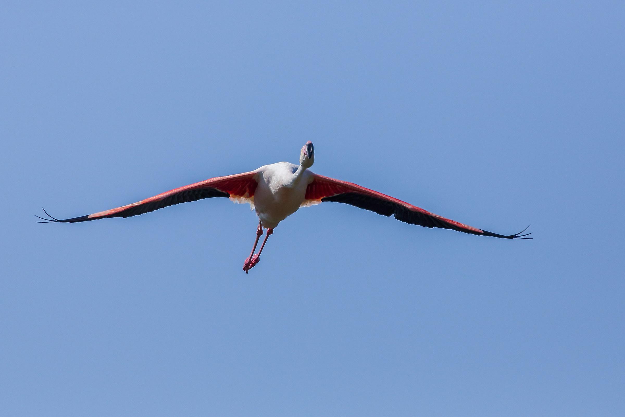 flamingo pink...