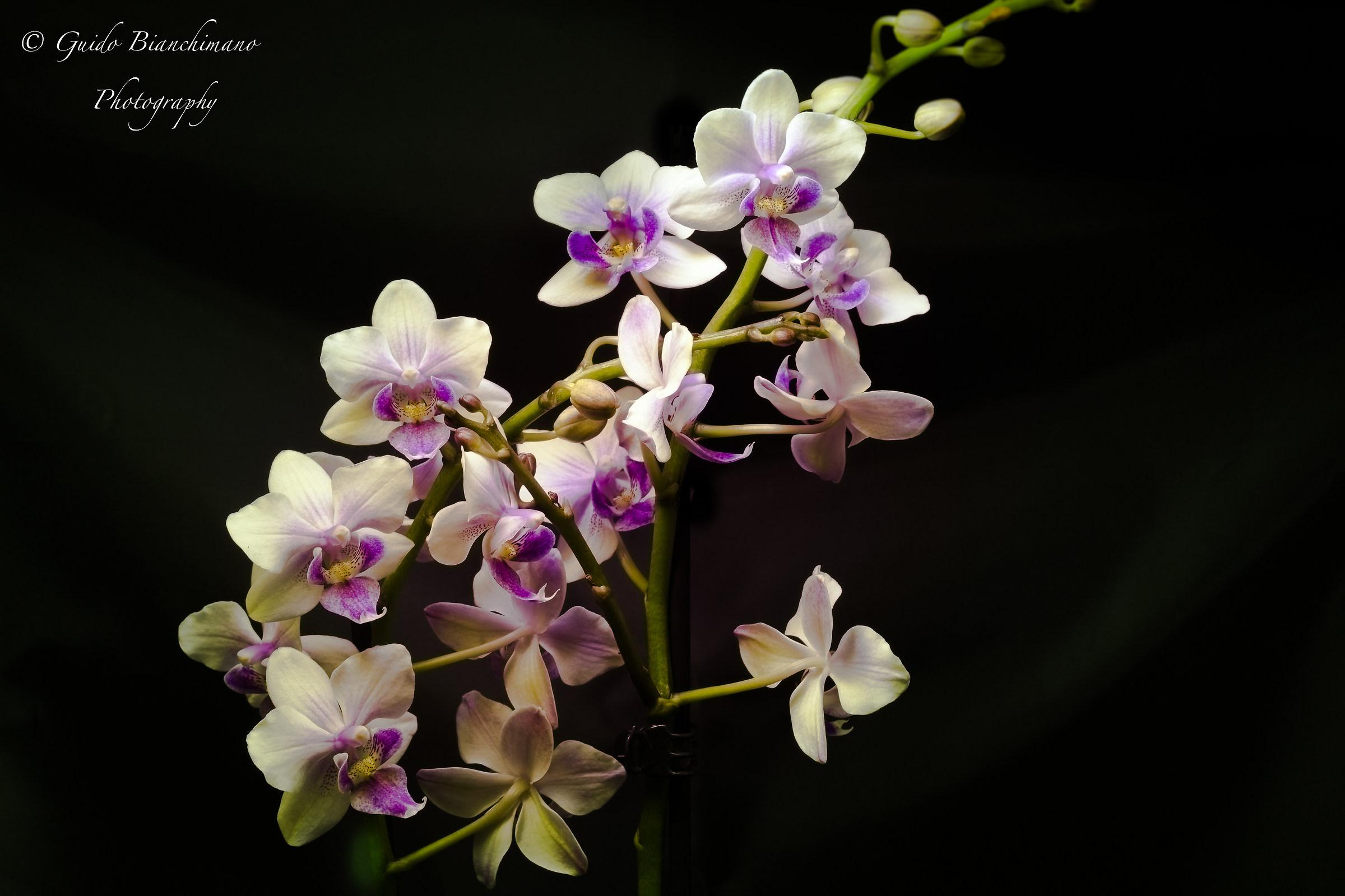 Orchid Color Makeup...