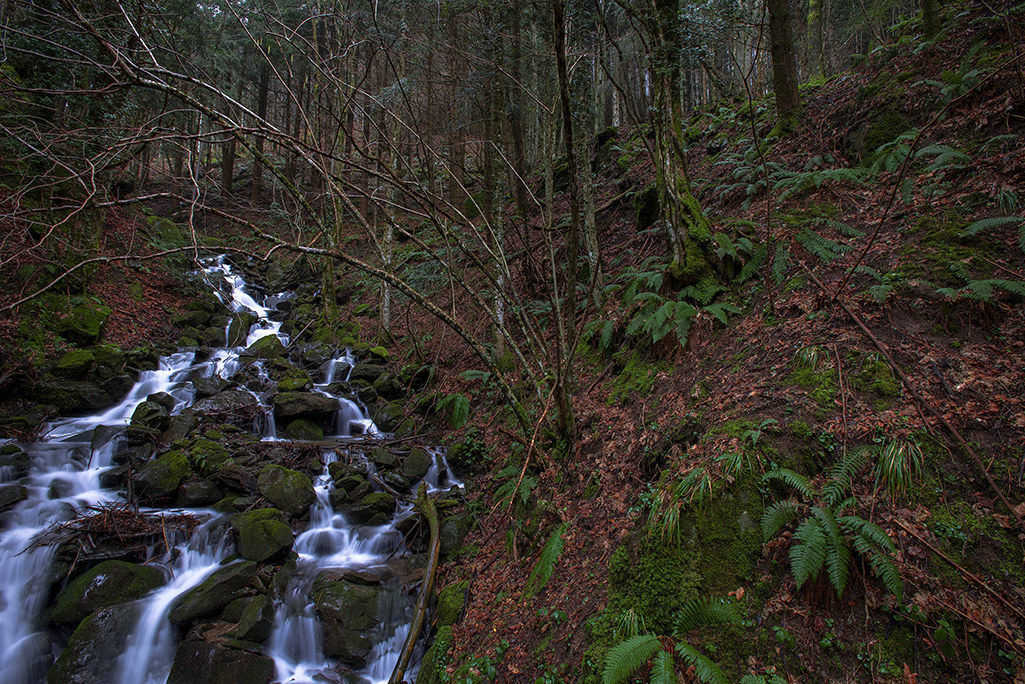 of camaldoli pn casentino forest...