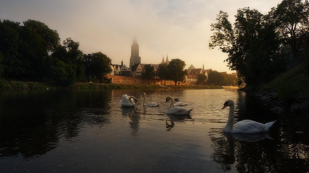 Fairy swans...
