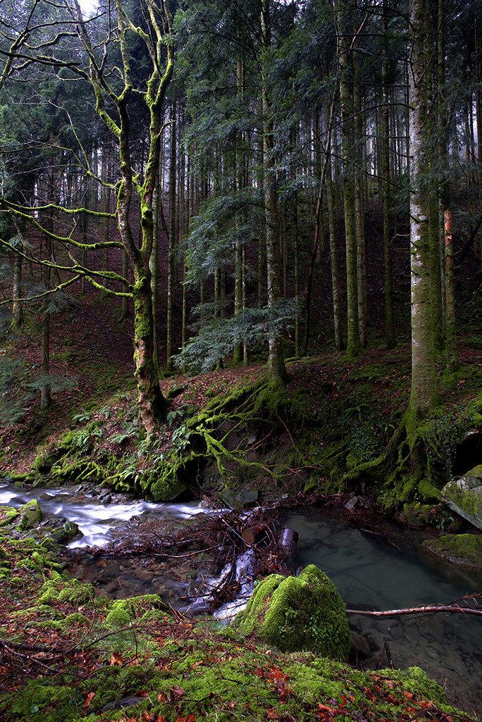 camaldoli of the forest 3...
