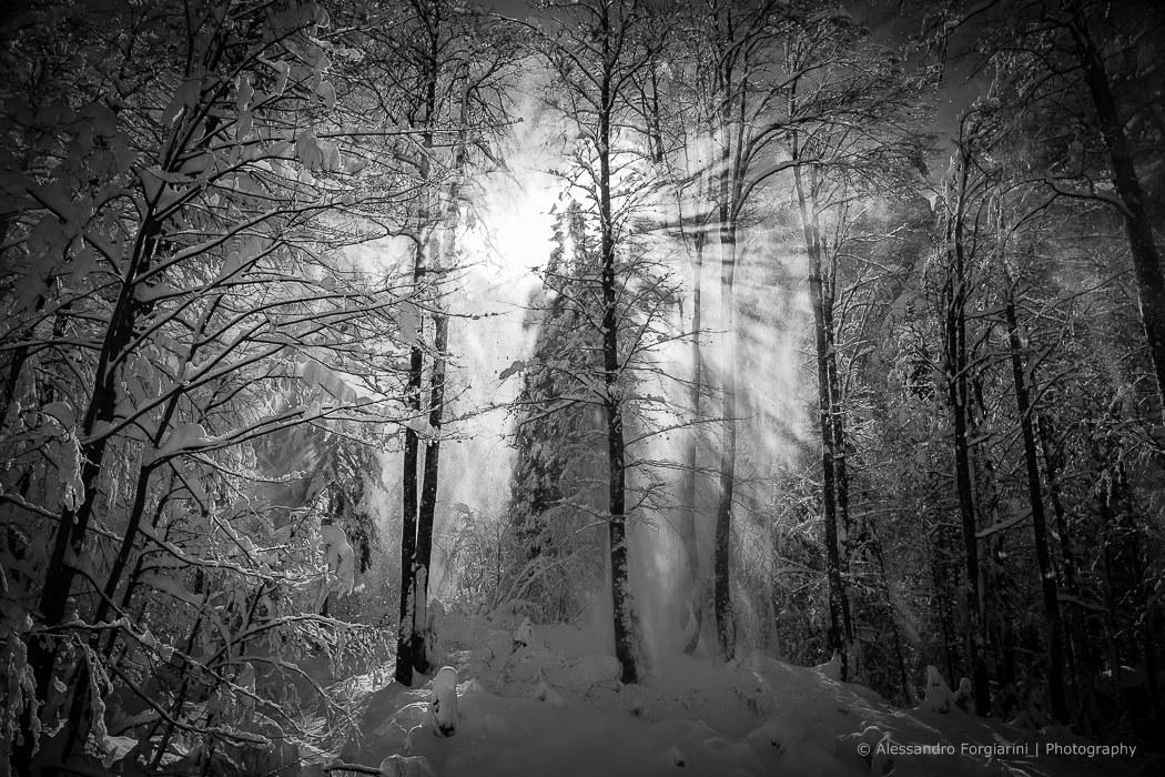 Raggi di luce tra la neve...