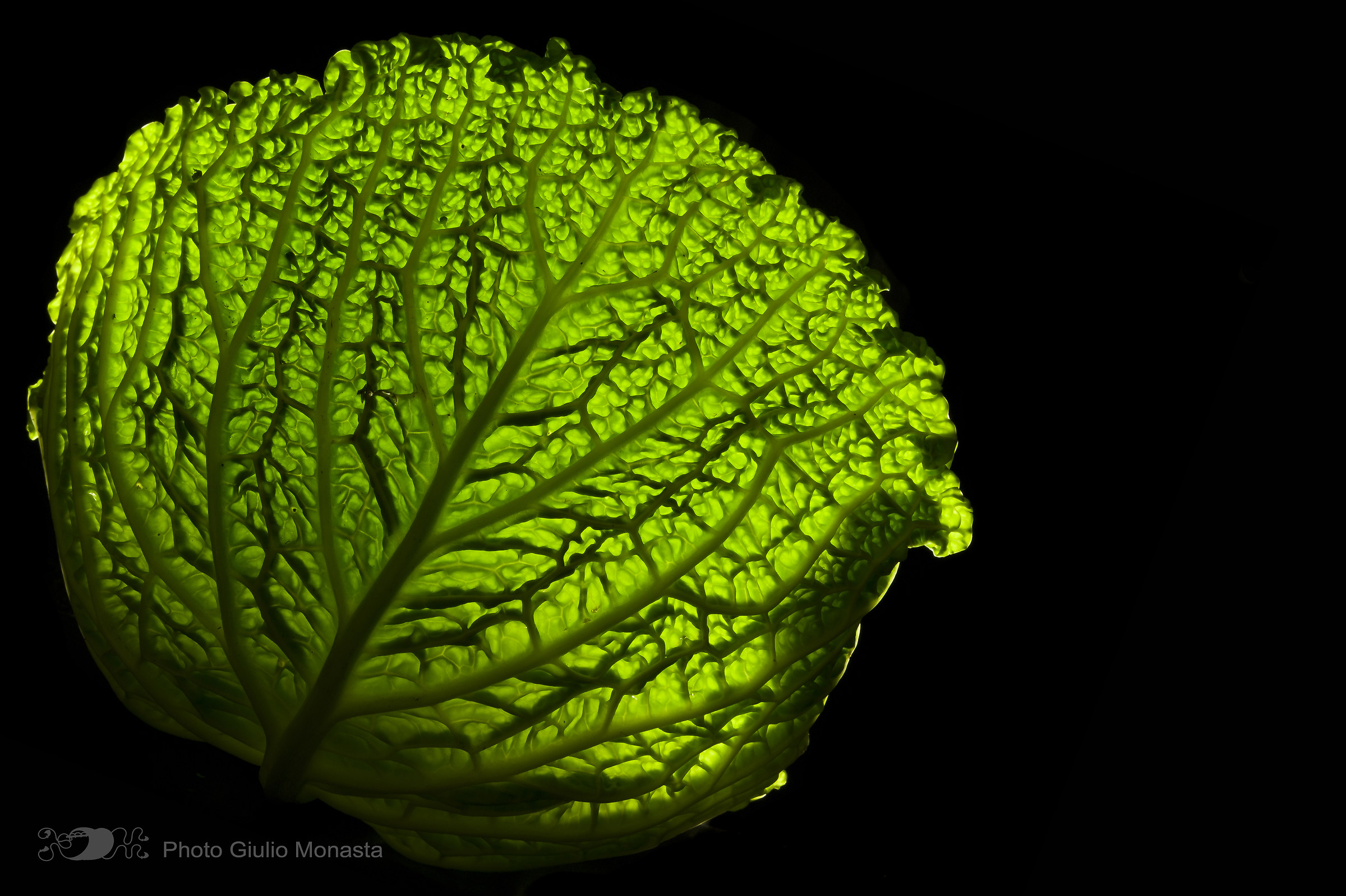 Cavolo Verza o Gorgonia verde?...