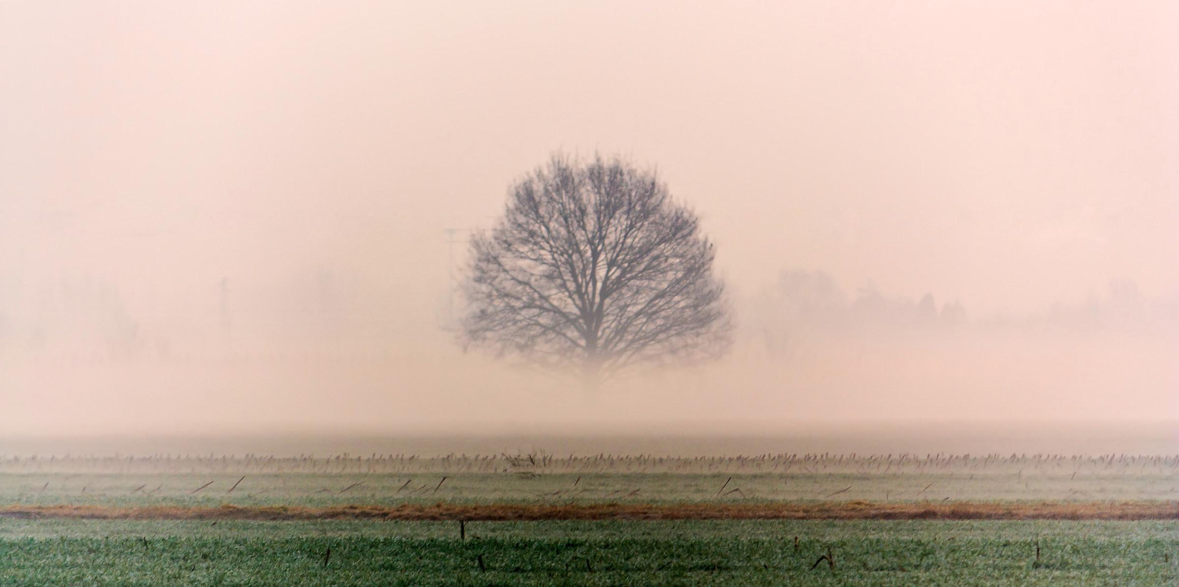 carpi - foggy day...