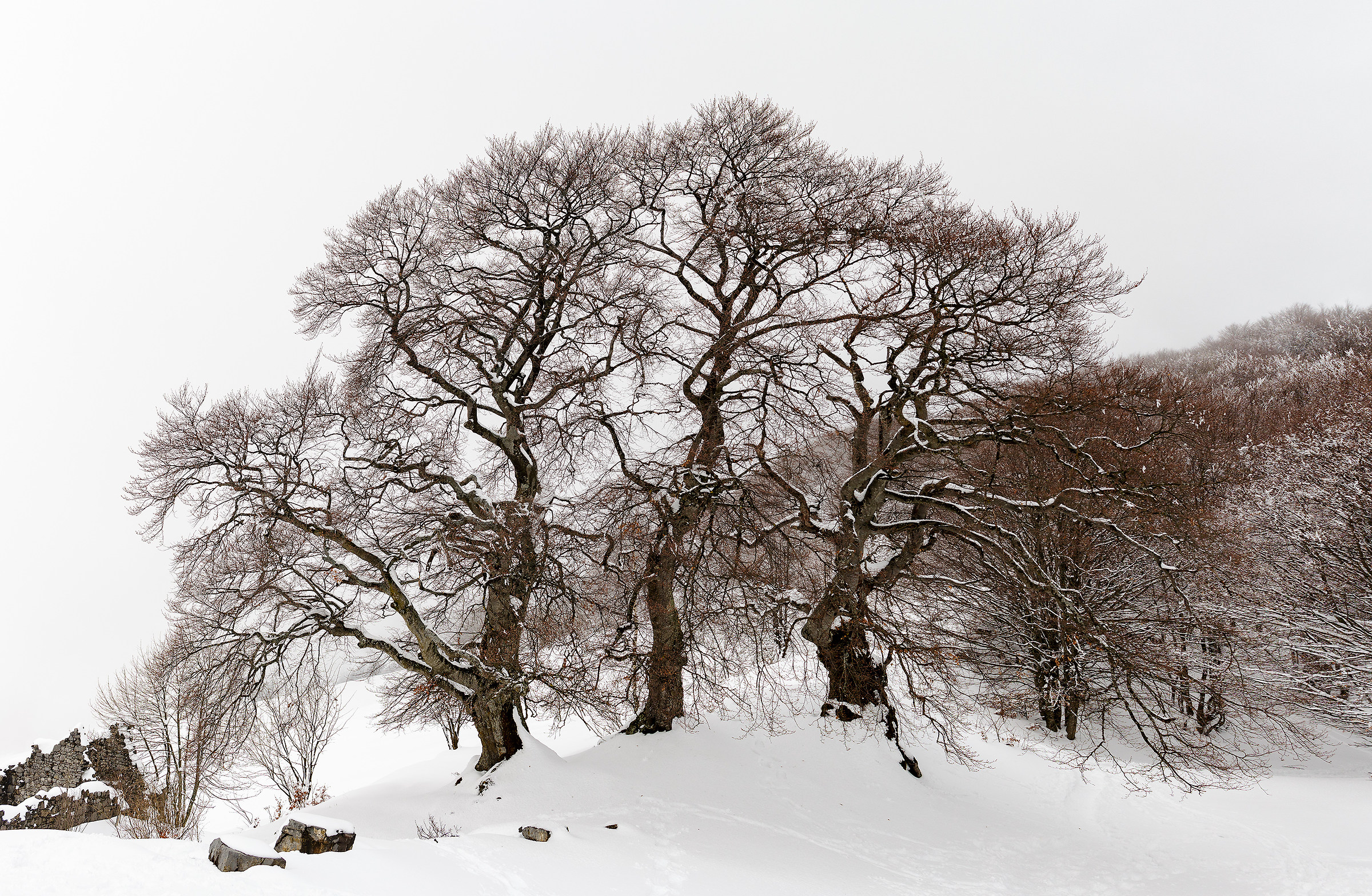 The Three Beeches...