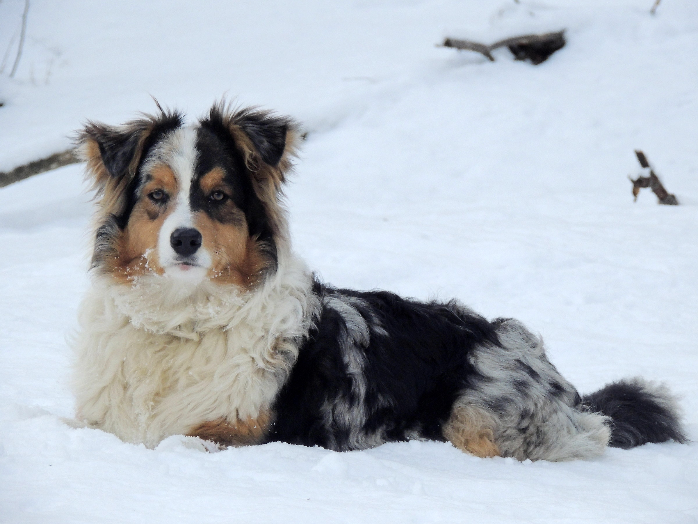 tobia and snow...