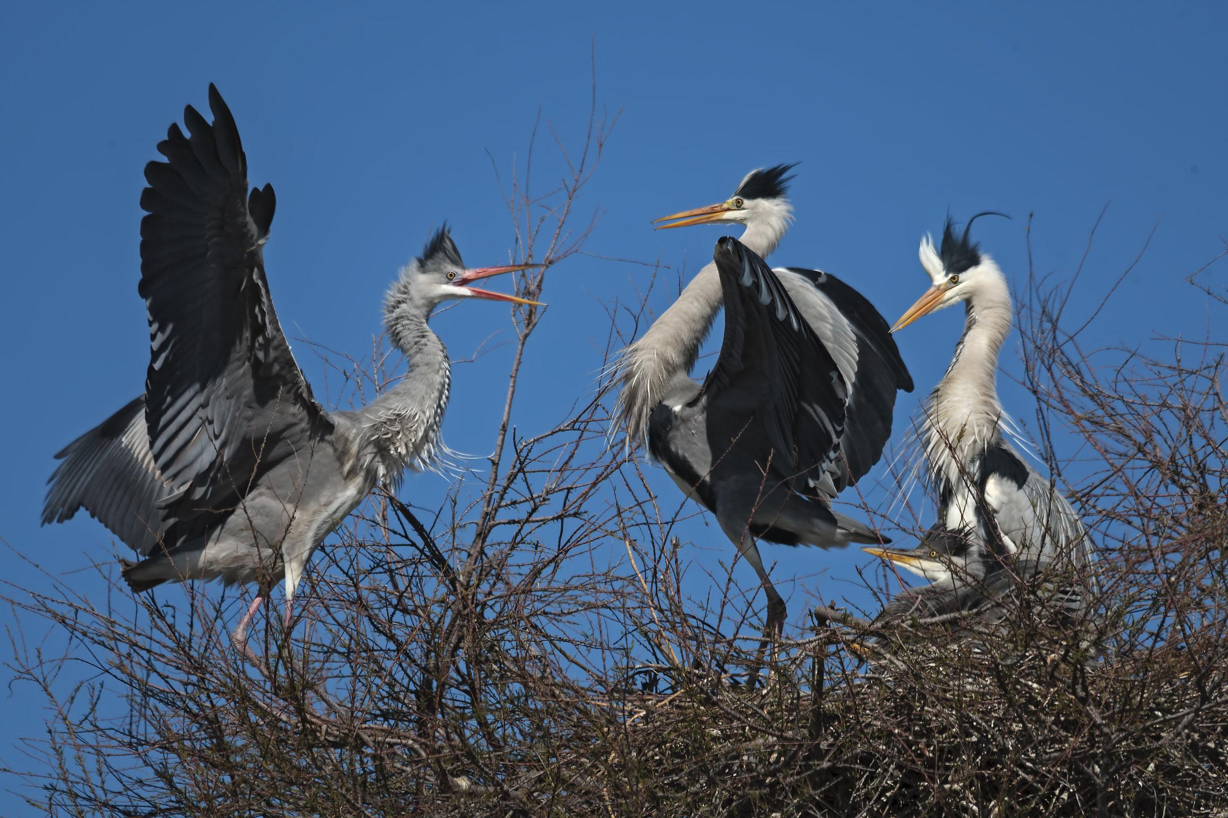 a difesa del nido...