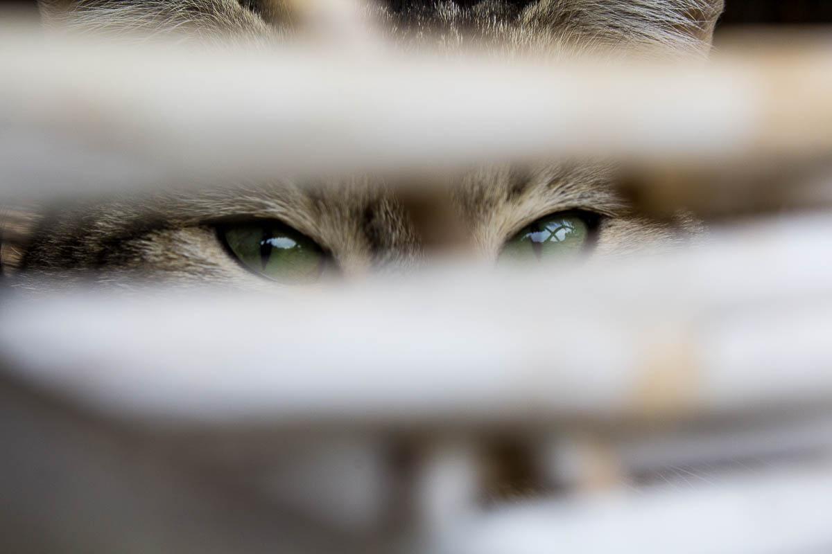 feline eyes...