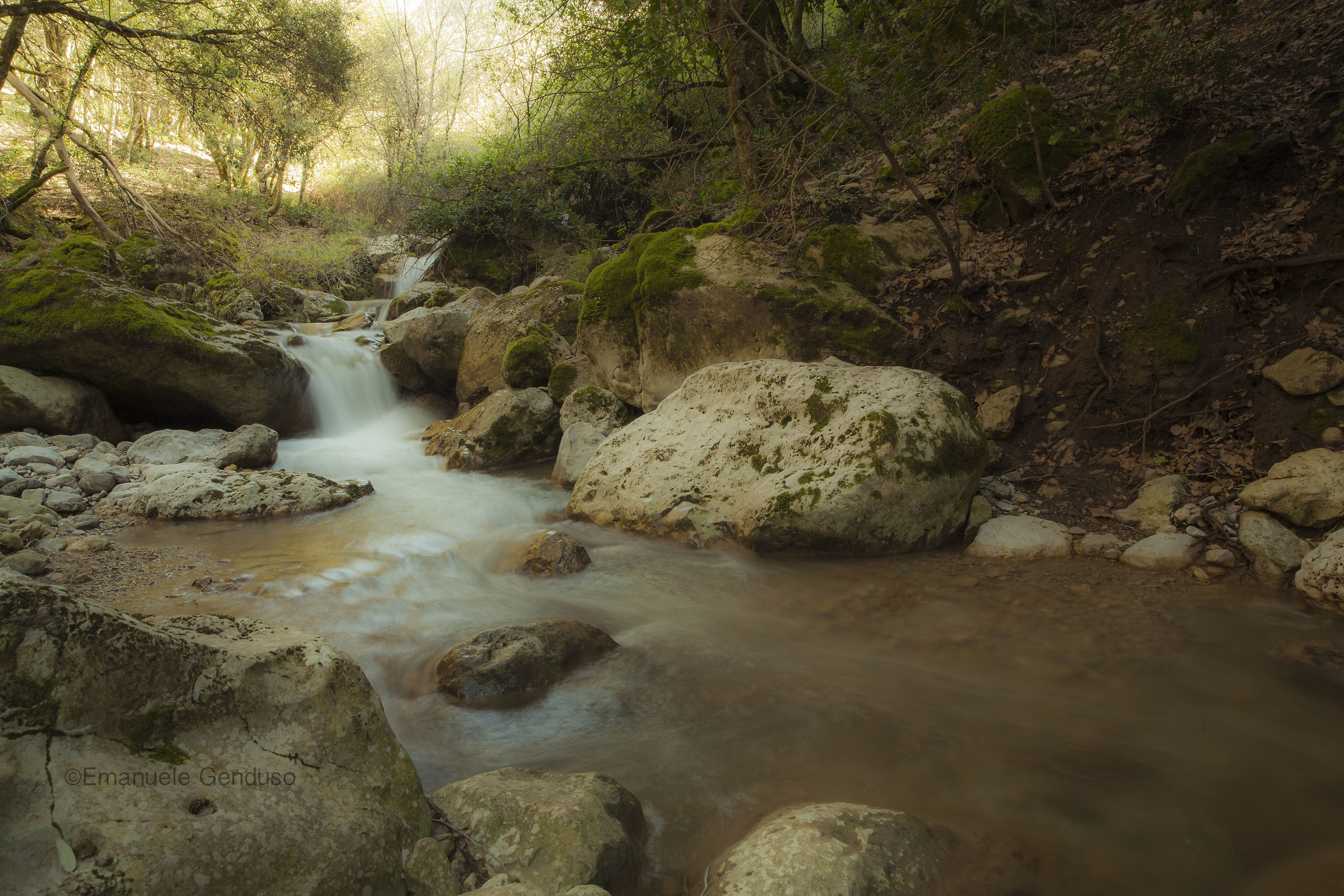 broad stream in the woods...