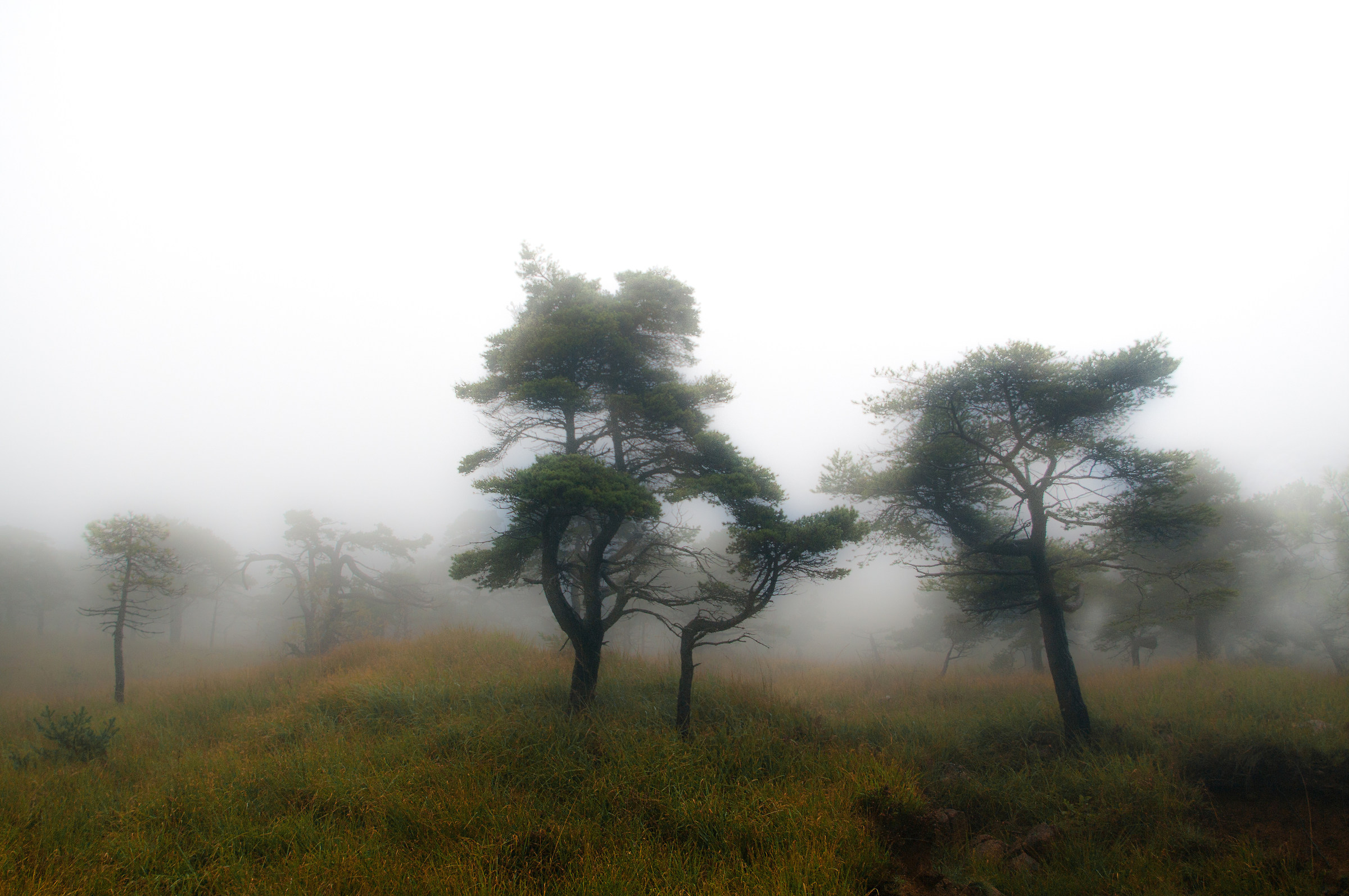 Ricordo nella nebbia...