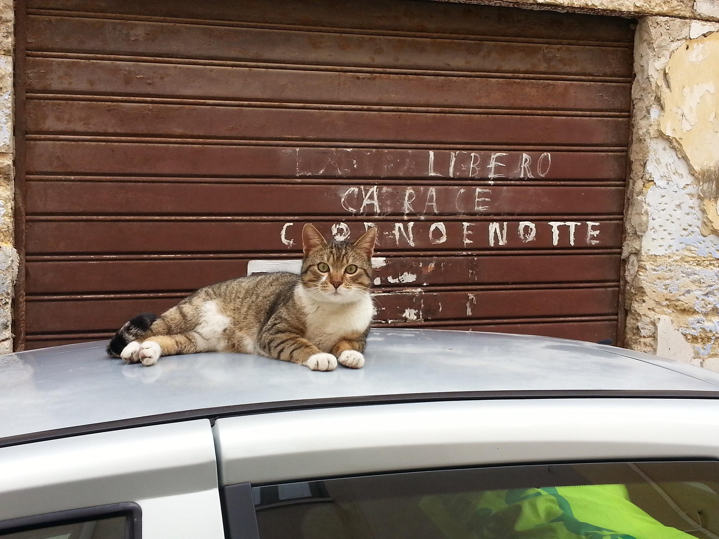 Parcheggio felino...