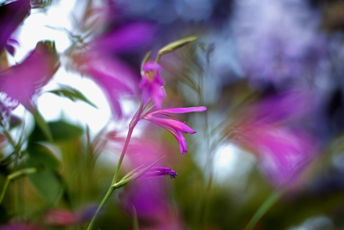 Nel mio giardino...