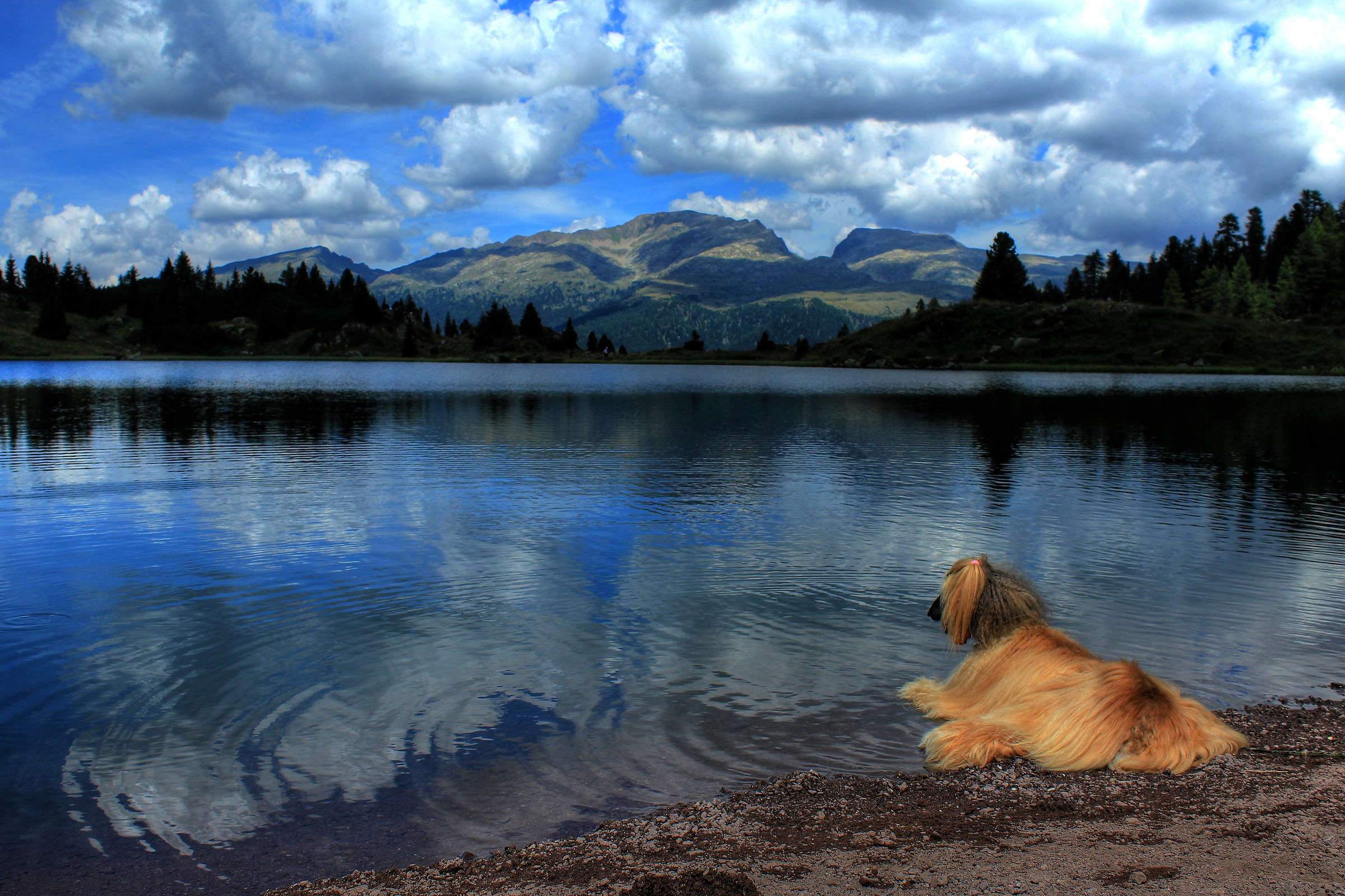Even a dog admiring the beauty ......