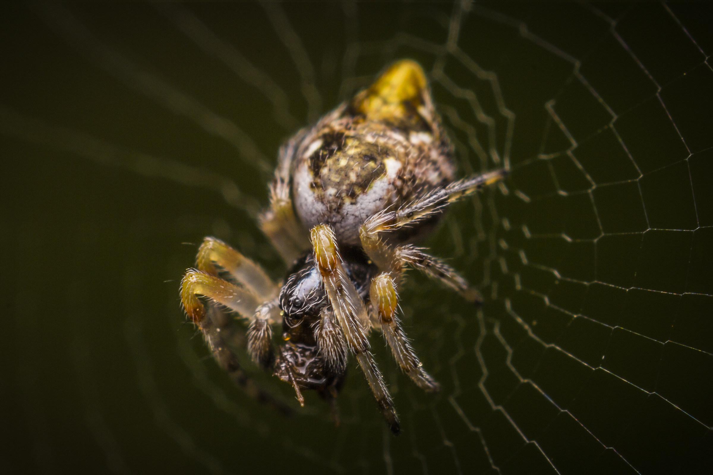 Spider on canvas...