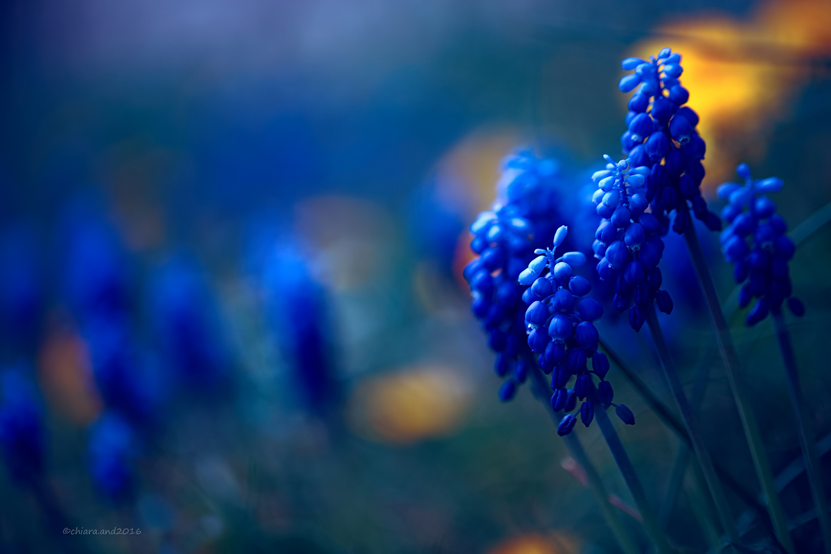 A touch of blue...