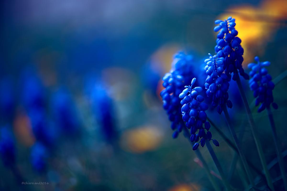 Un tocco di blu...