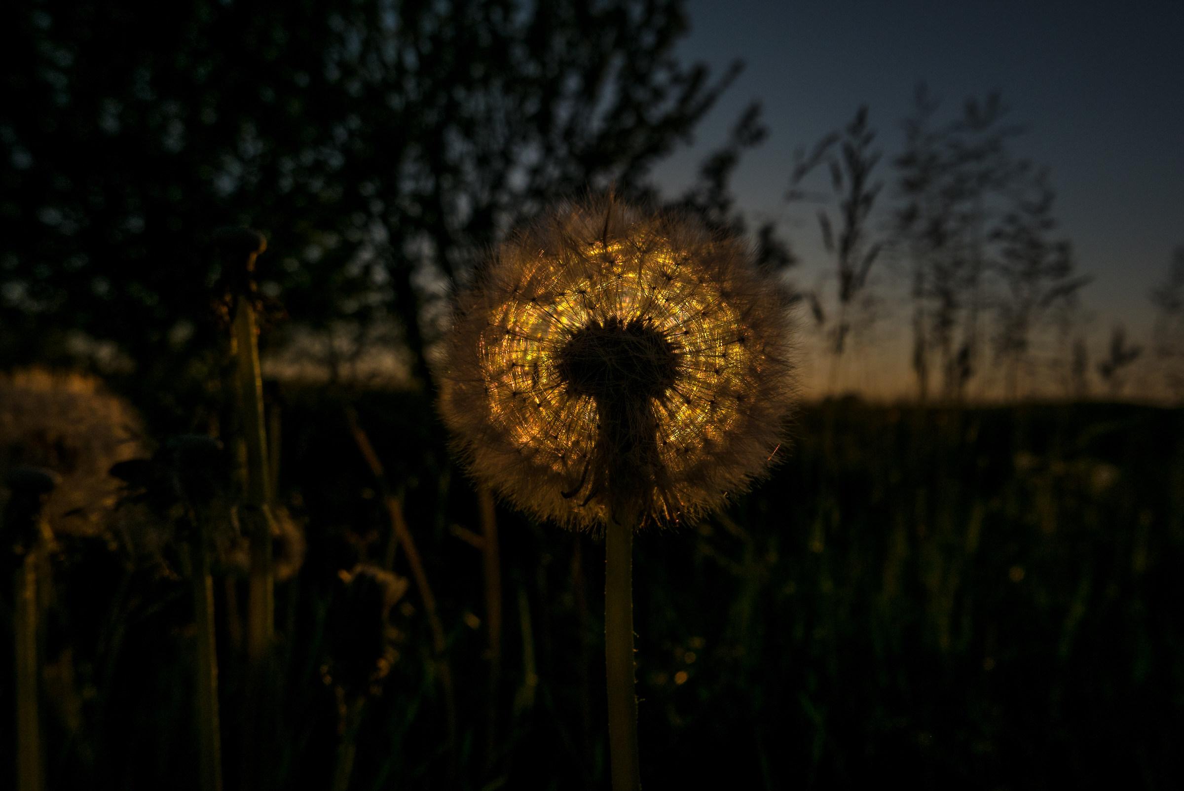 Lampione...