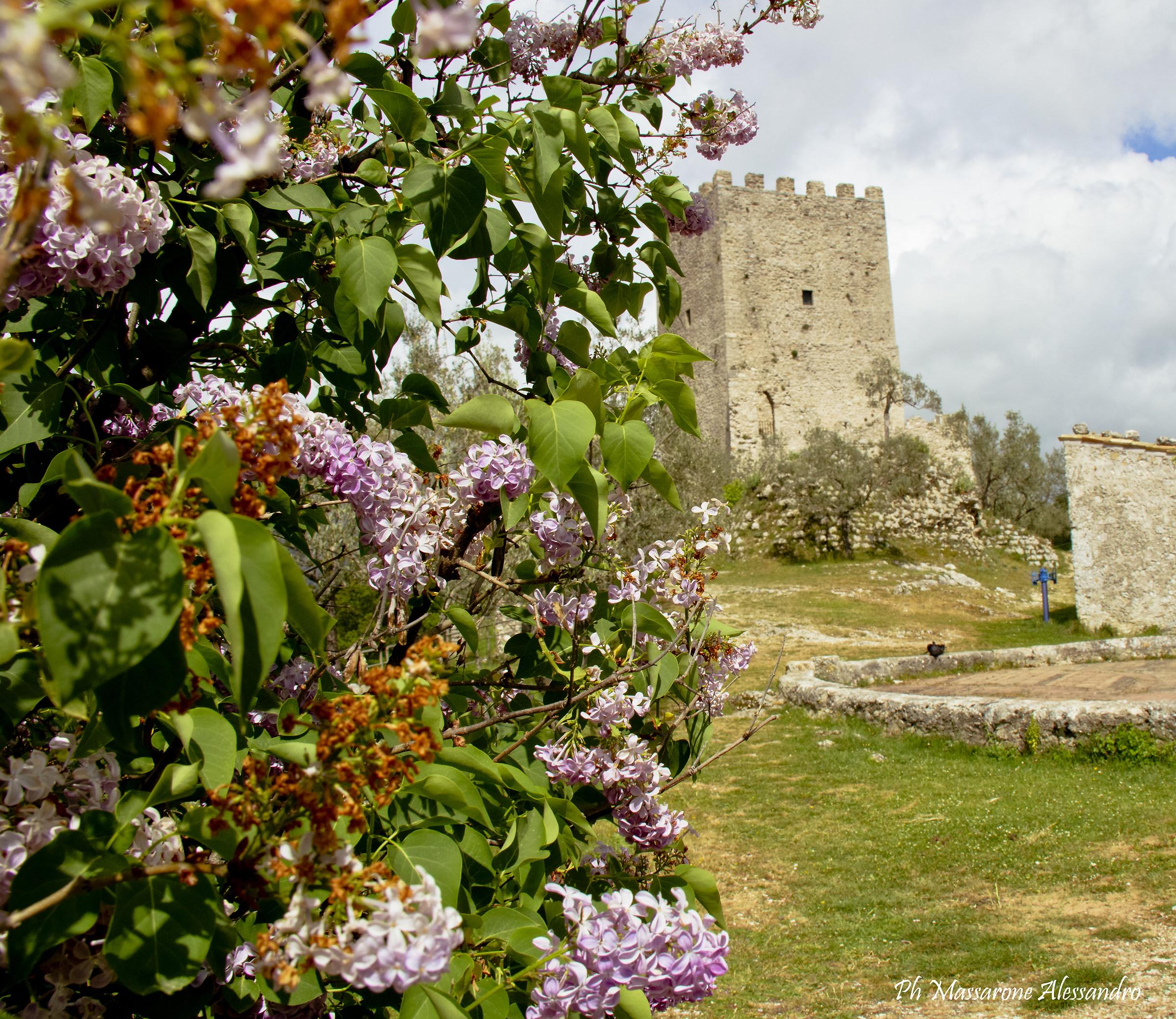 Tower of Cicero...
