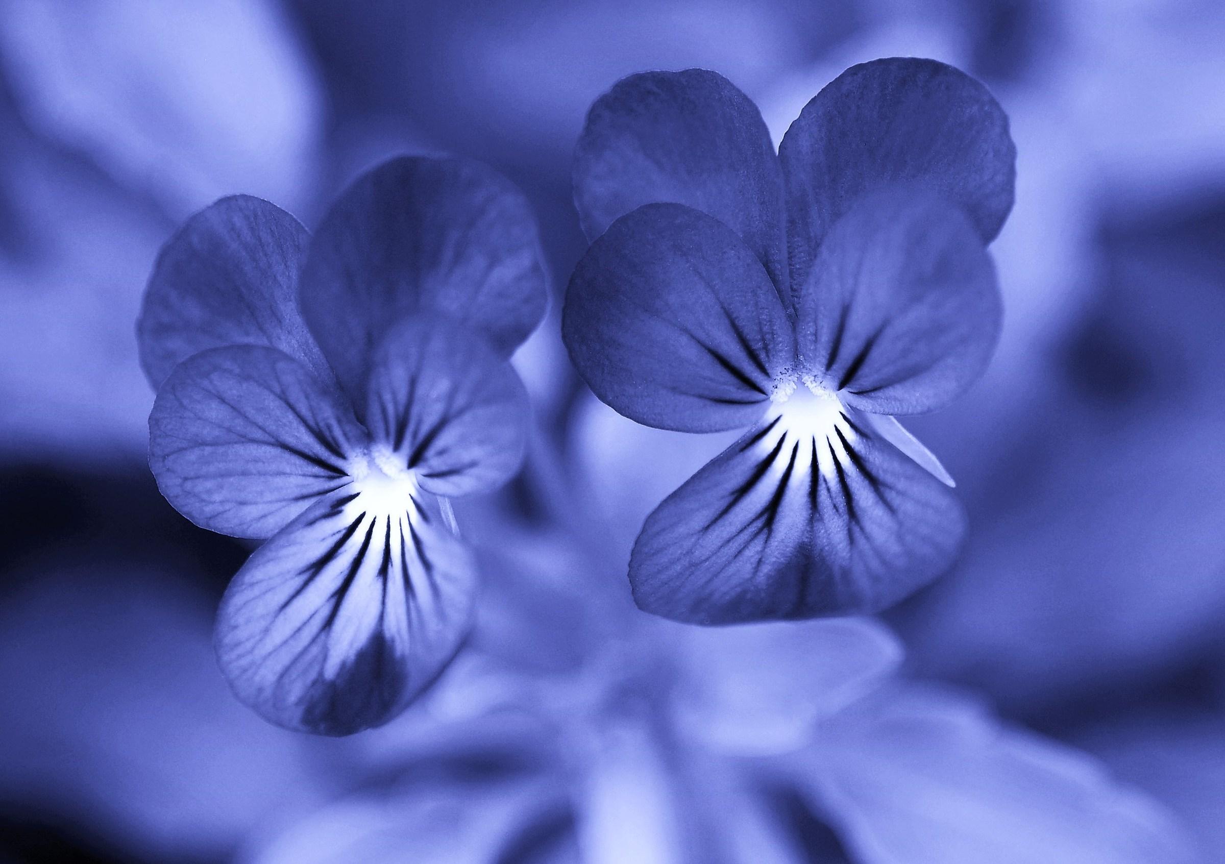 ... Blue ......