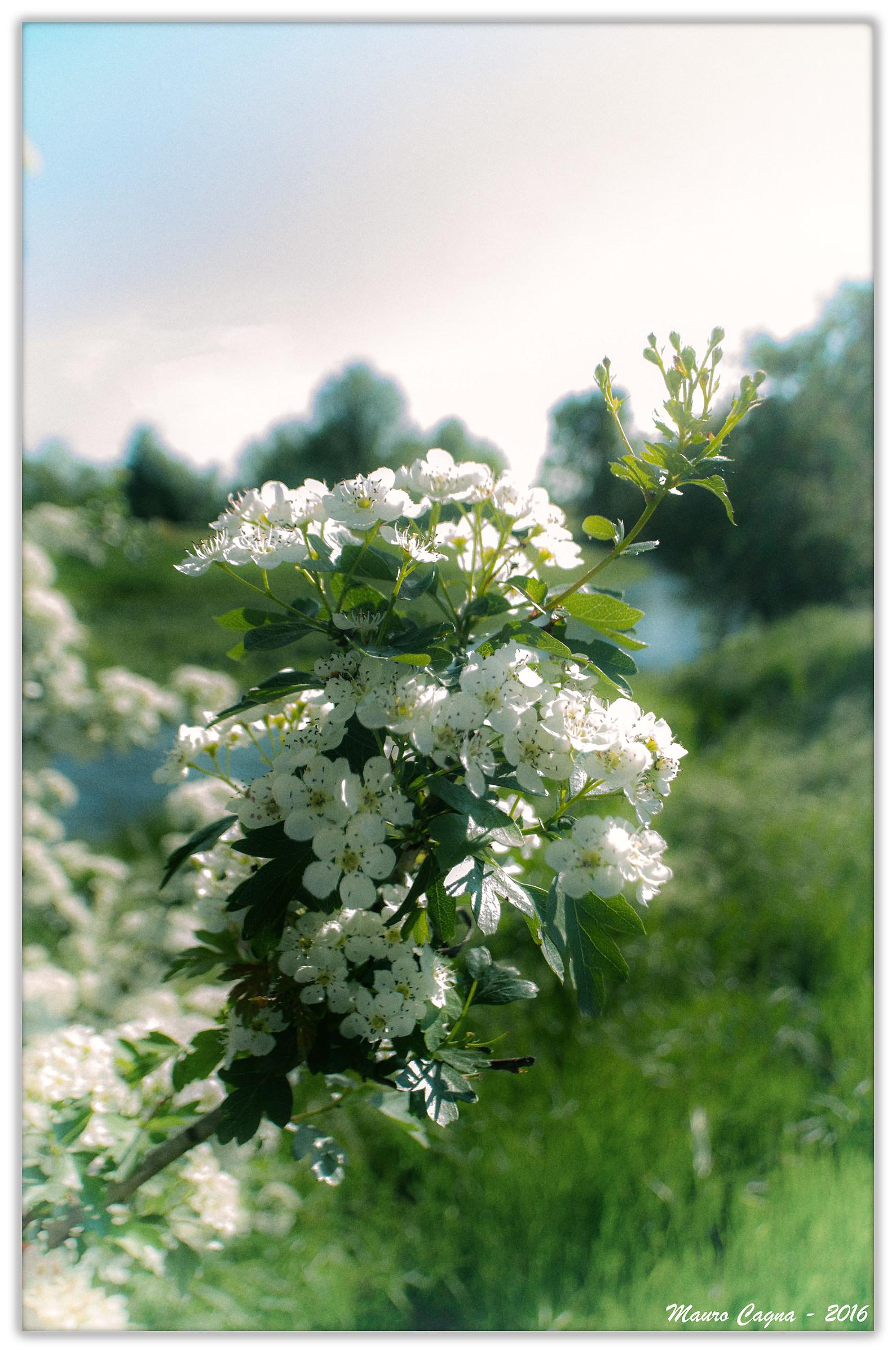 Colori e profumi di primavera...