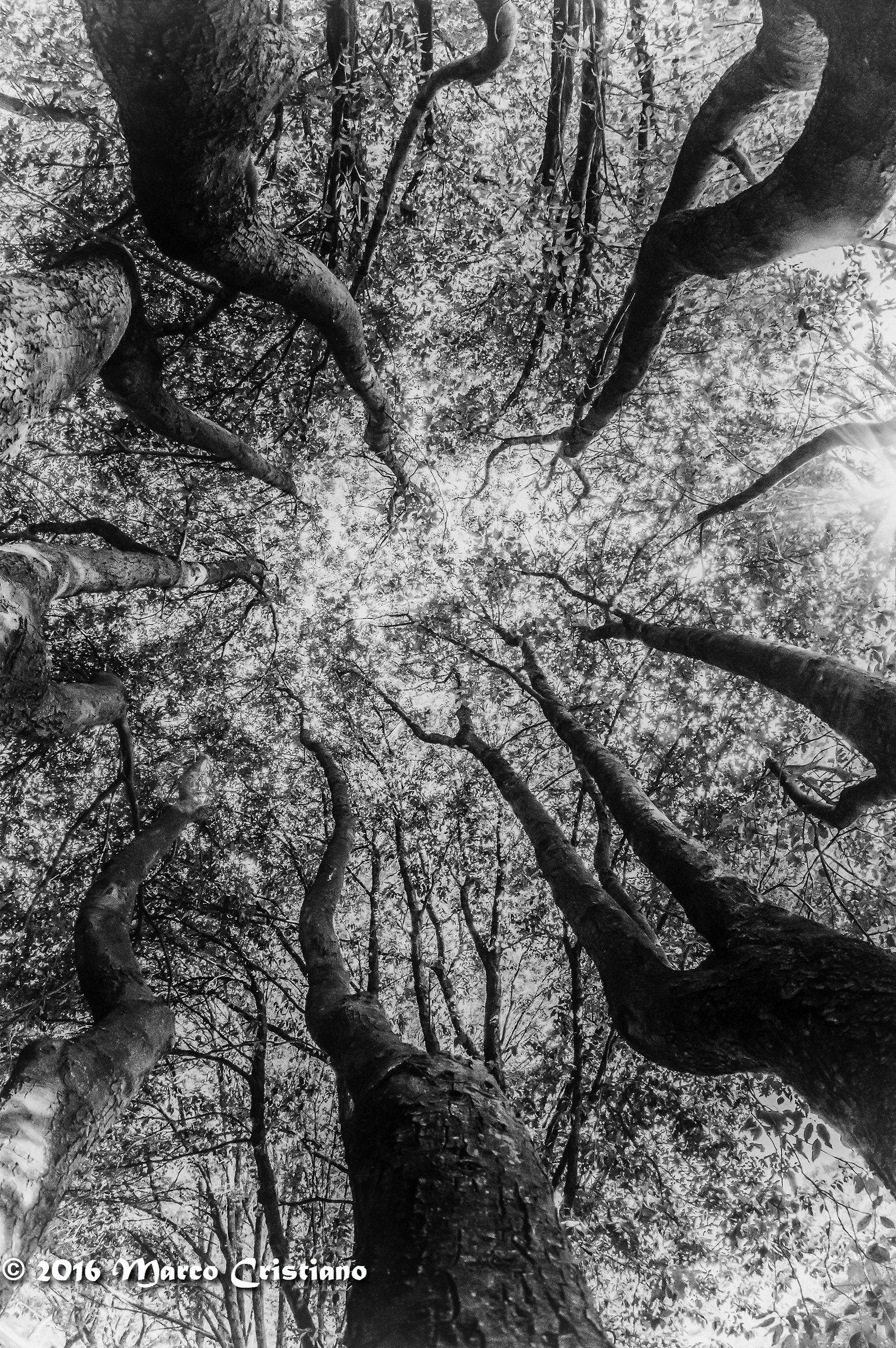 L'abbraccio di un albero......