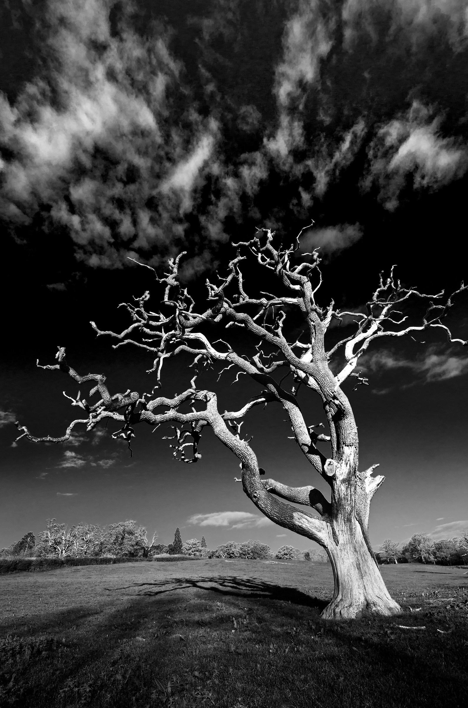 The Dead Old Oak - al mattino....
