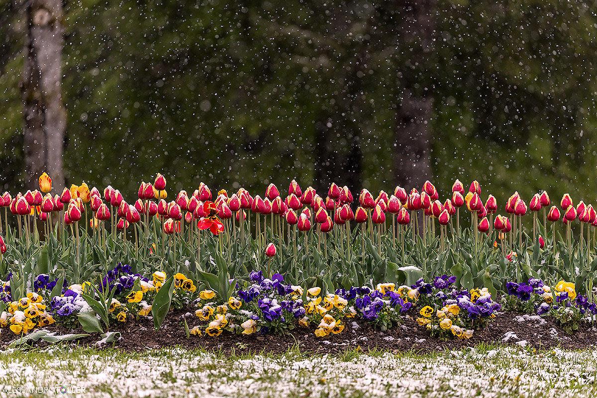 Crazy Spring...