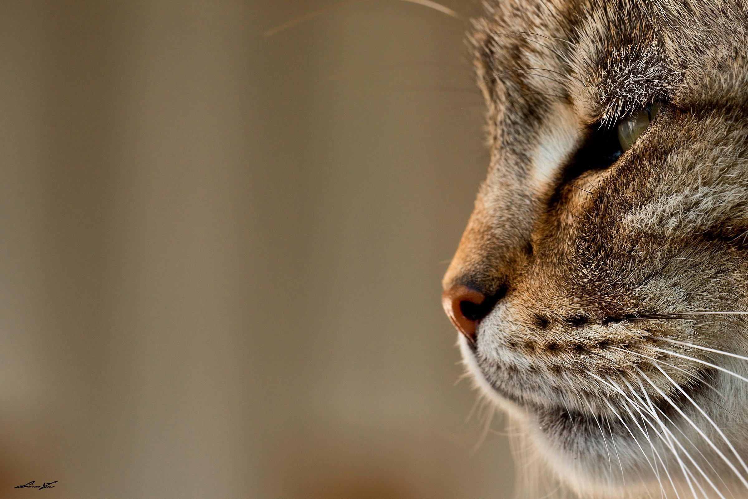 meow .....