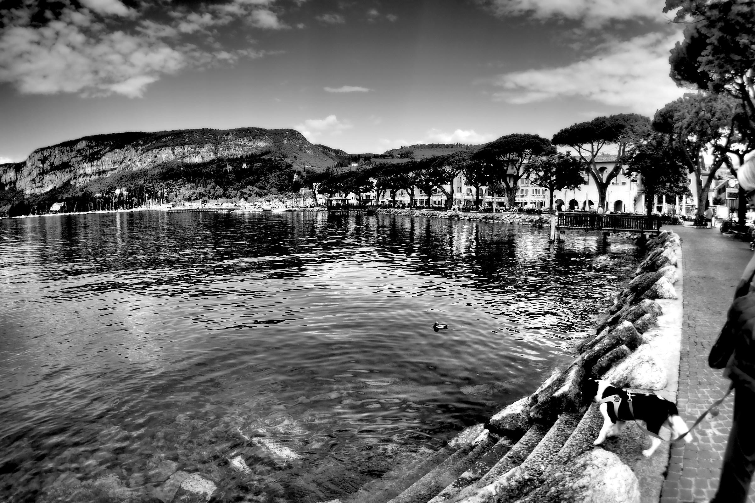 Il cavalier al lago...