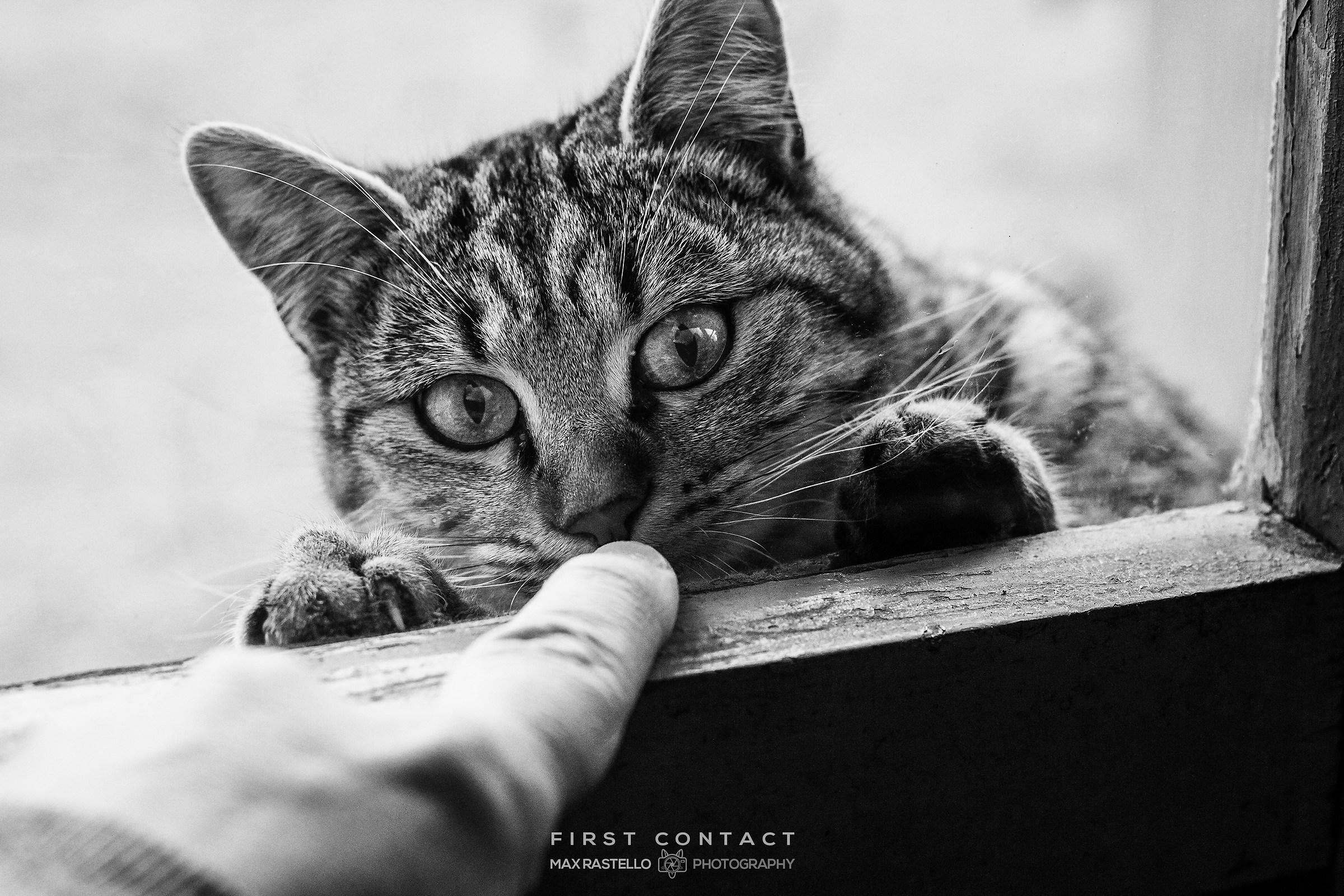 First Contact: Il Primo Contatto...