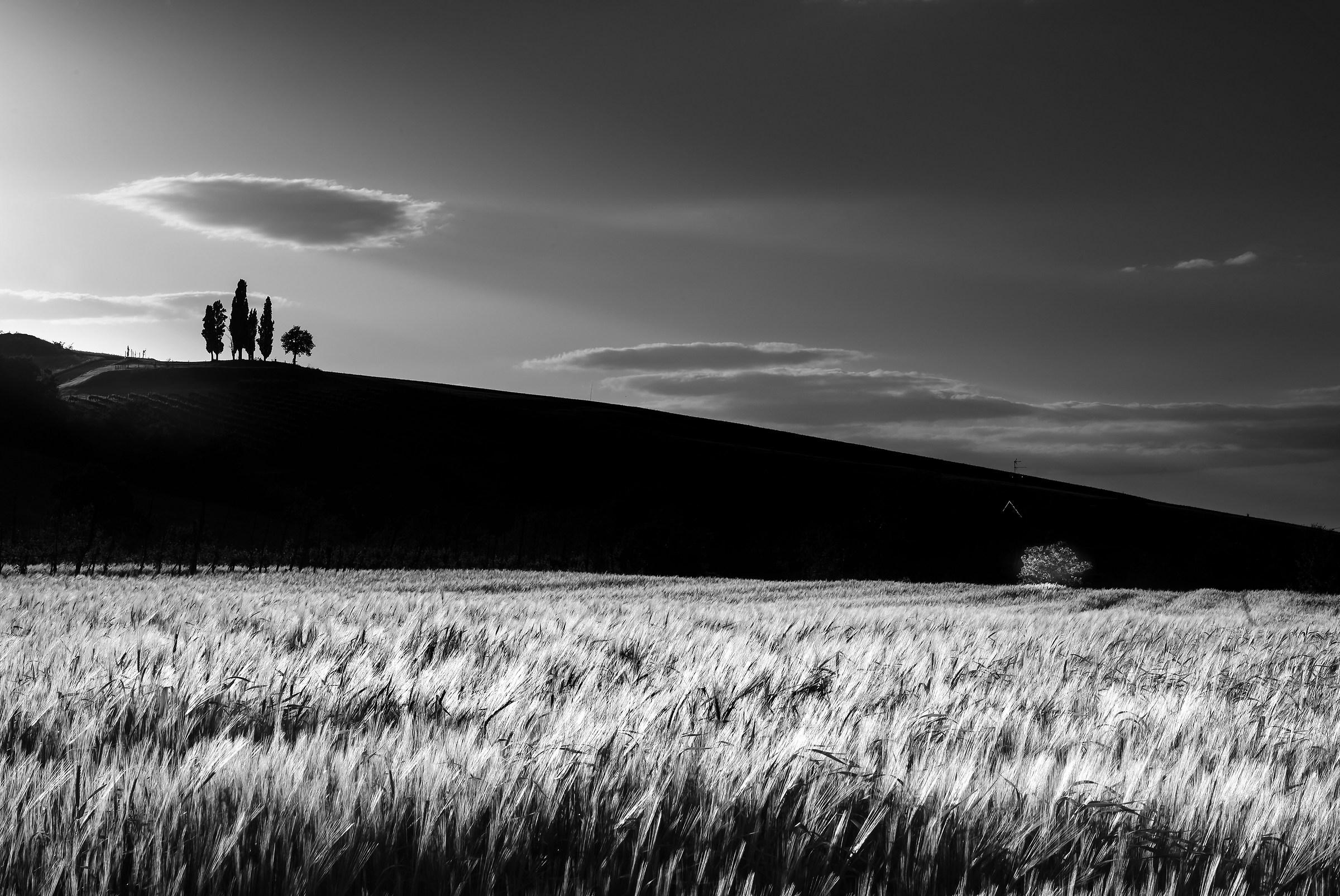 The sentries....
