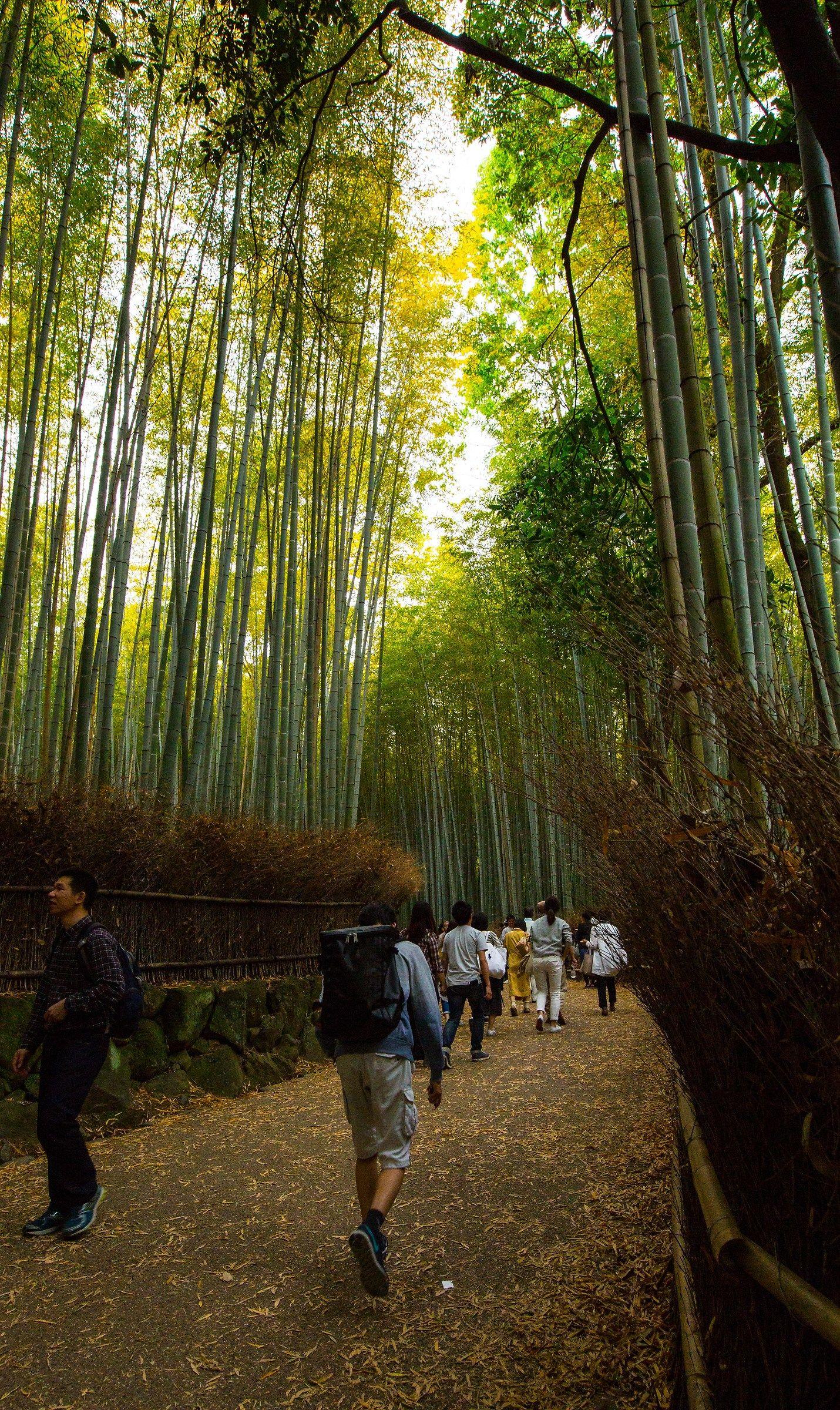 Arashiyama Kyoto...