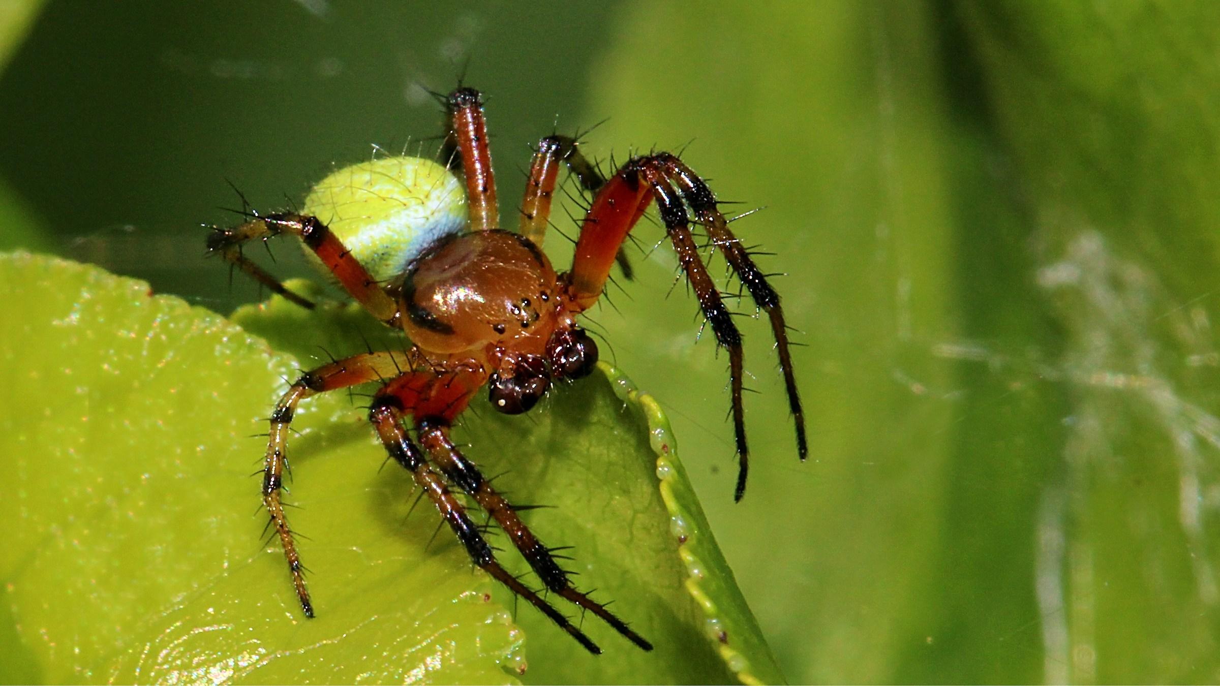 Little Spider...