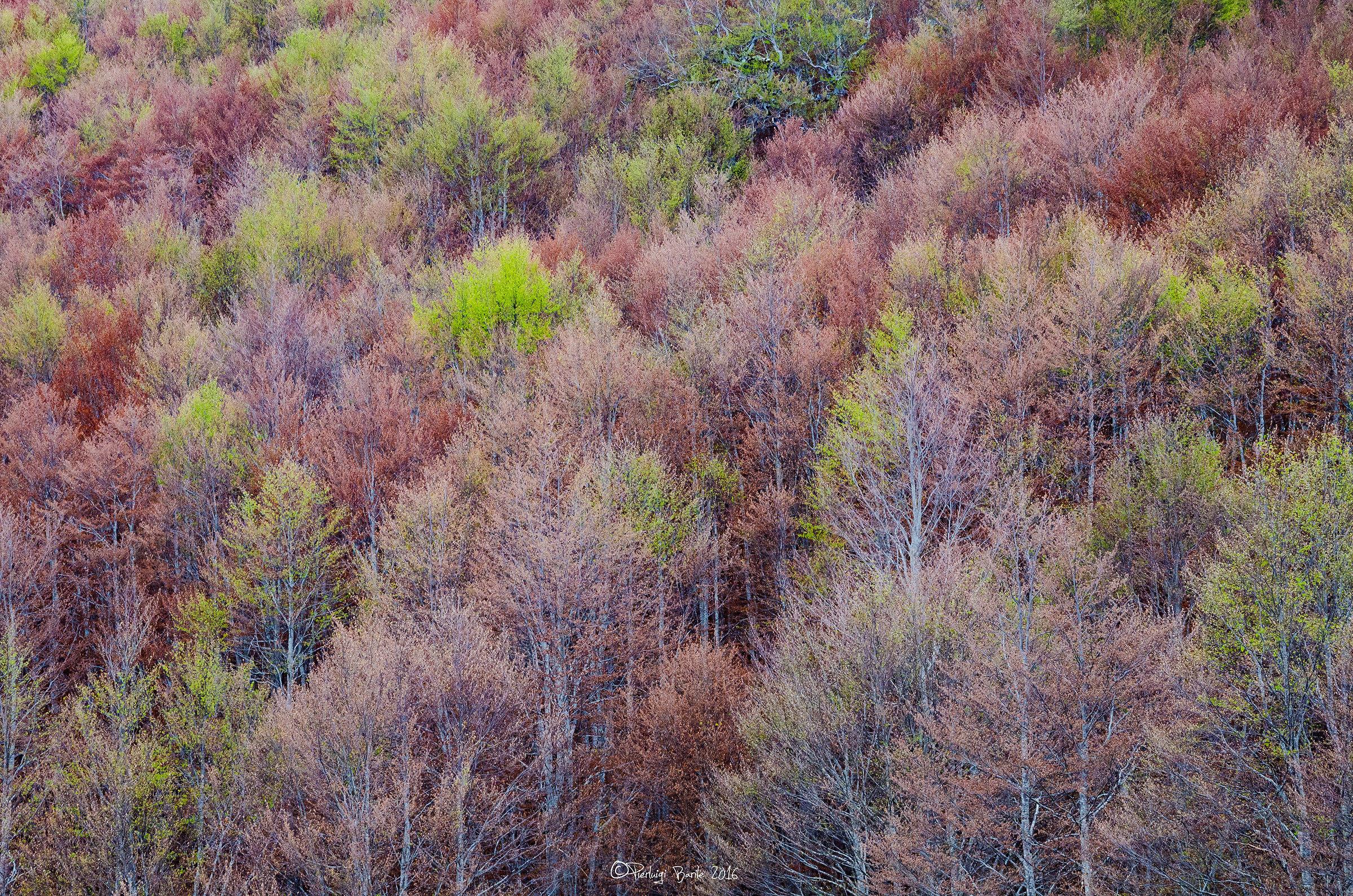 Woods...