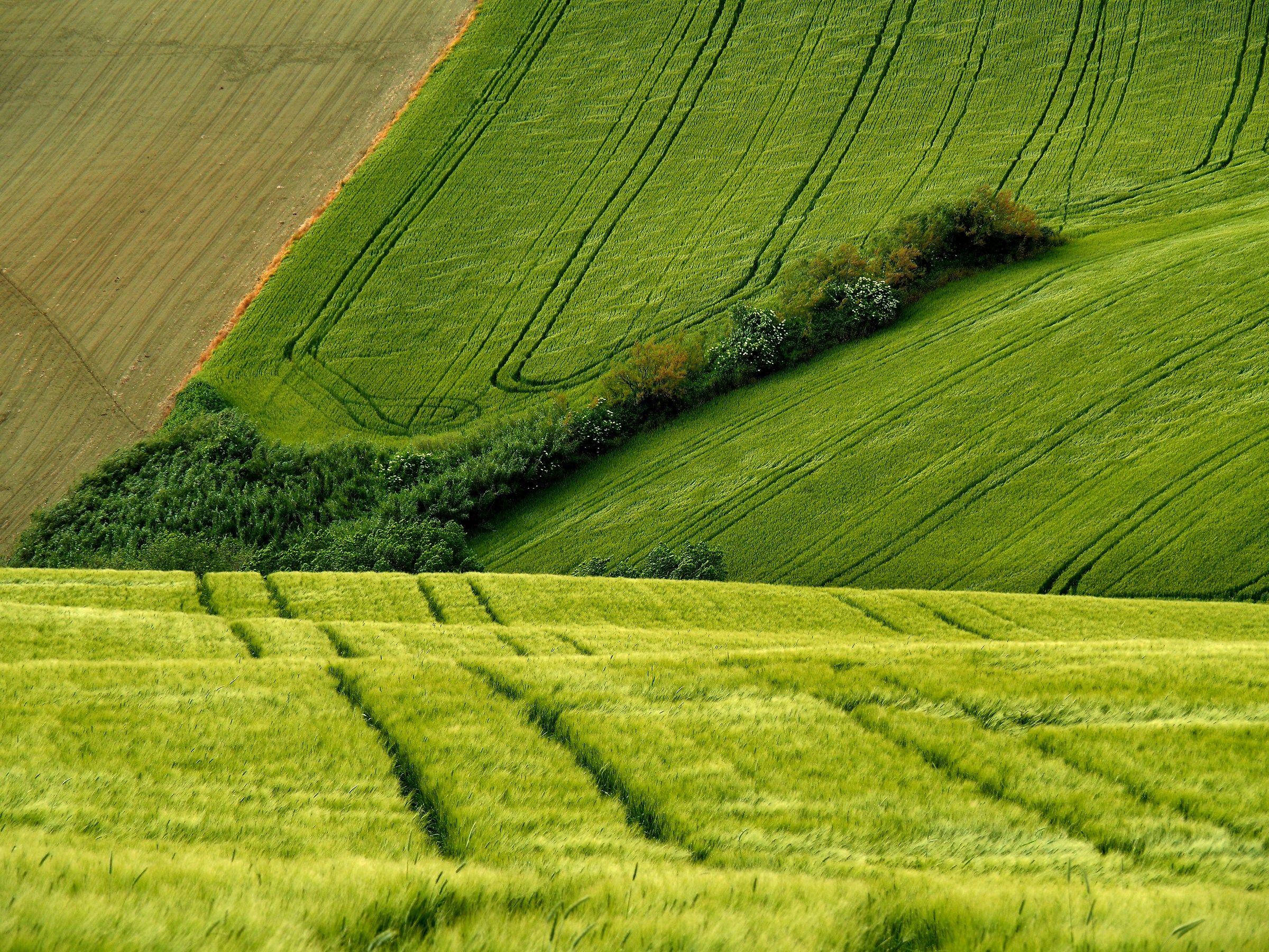 geometry of nature...