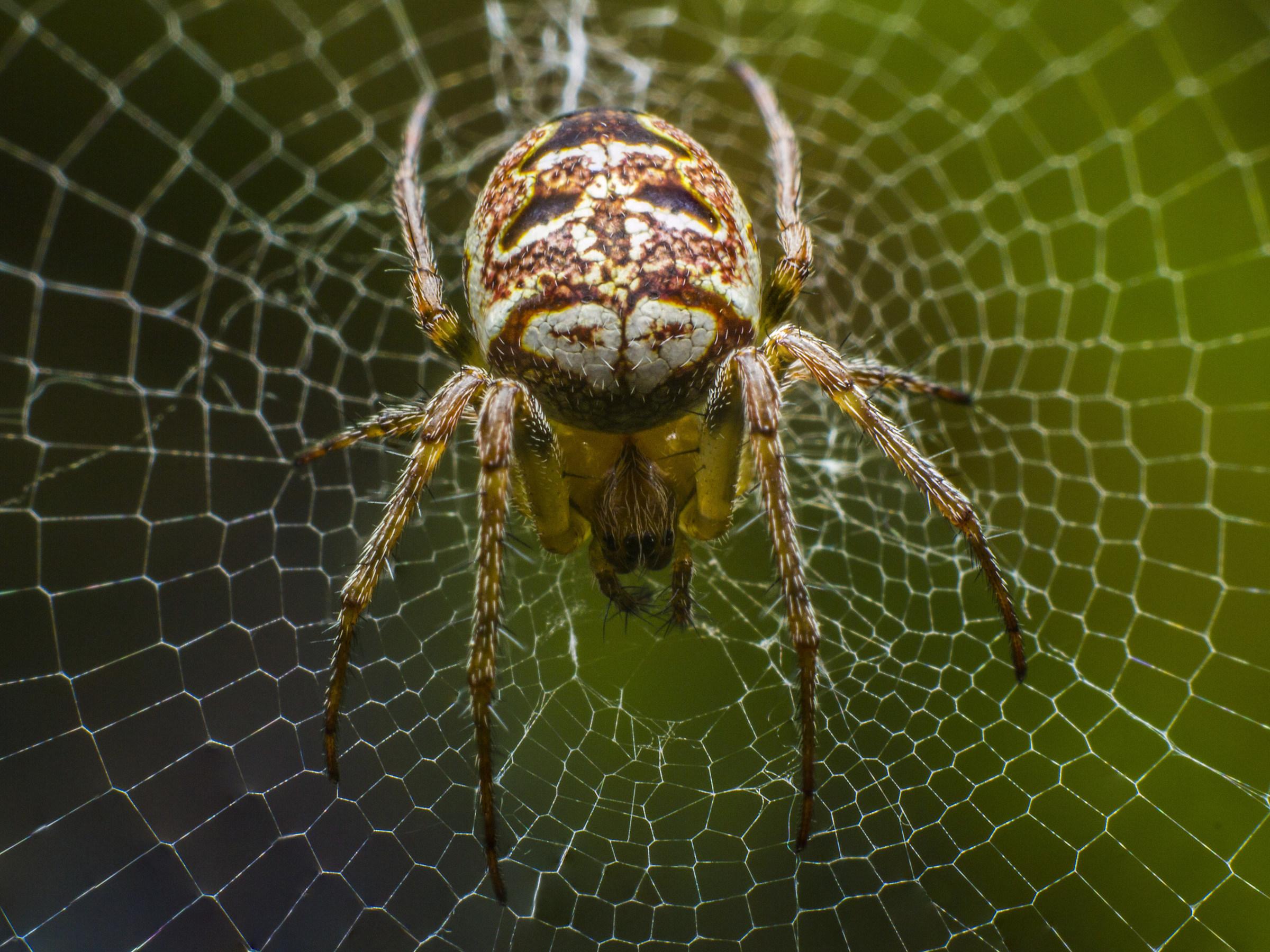 Spider Canvas...