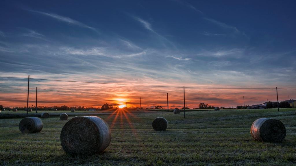 Raw bales of hay ......