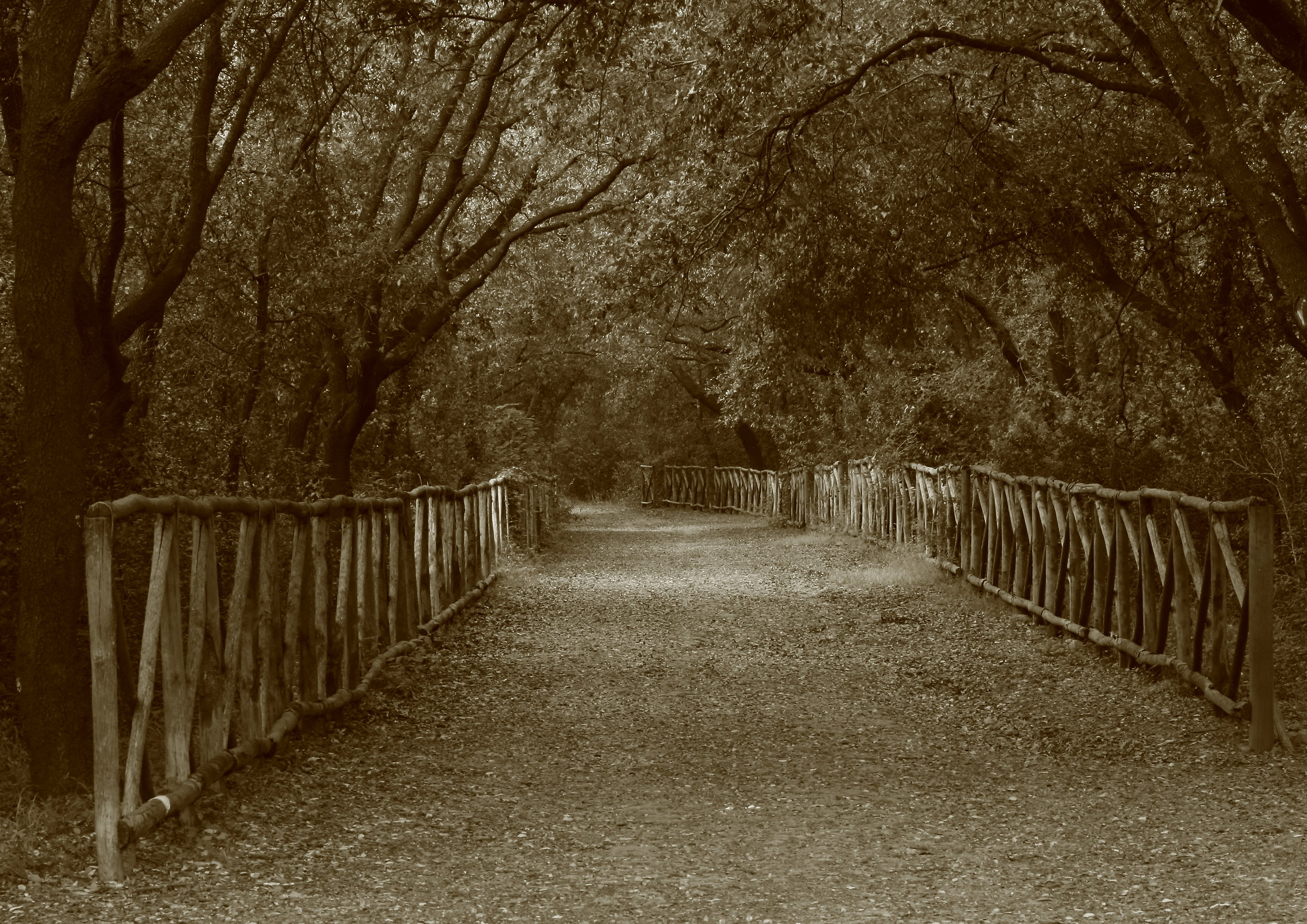along the avenue in silence, my thoughts and fears...