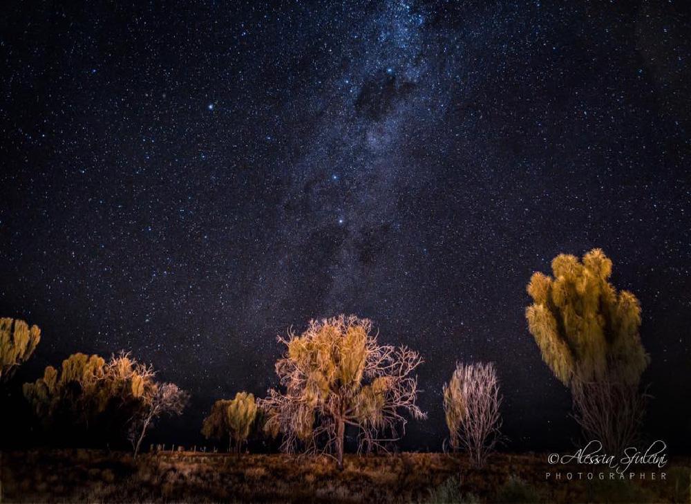 rubber tree. Outback Australia...