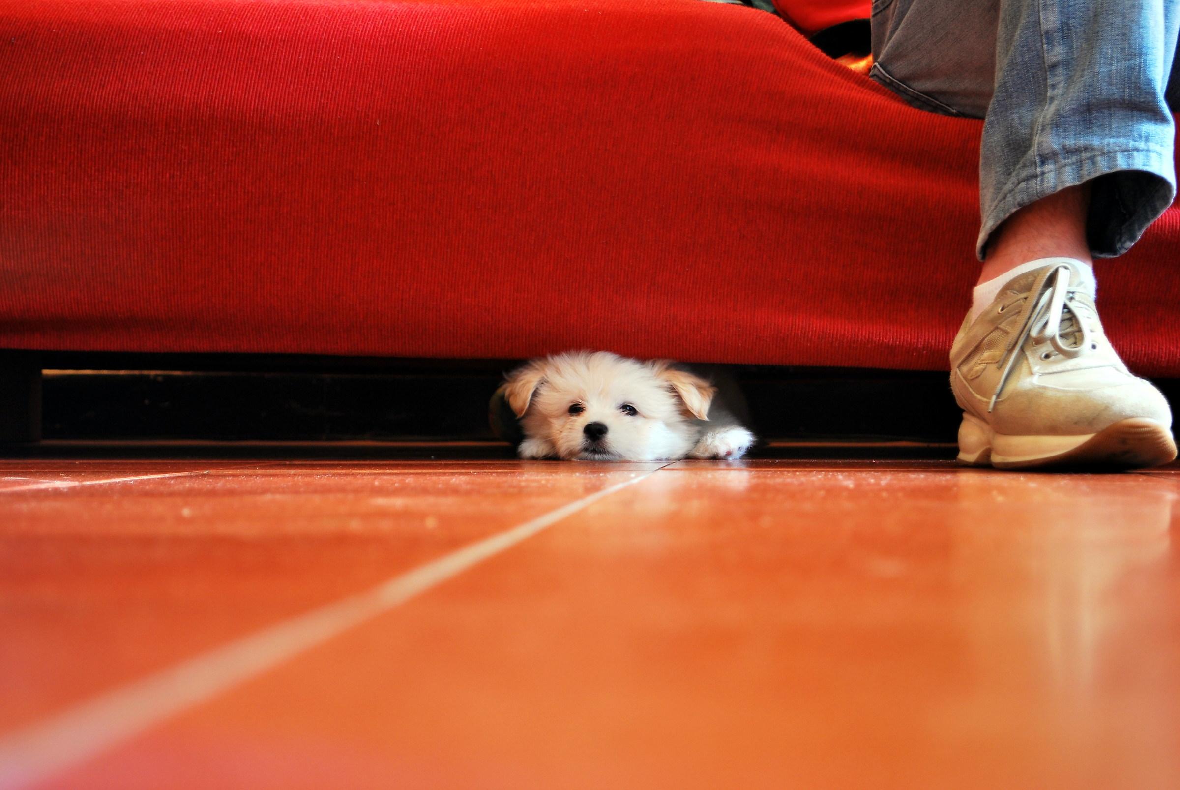 Tuco puppy...