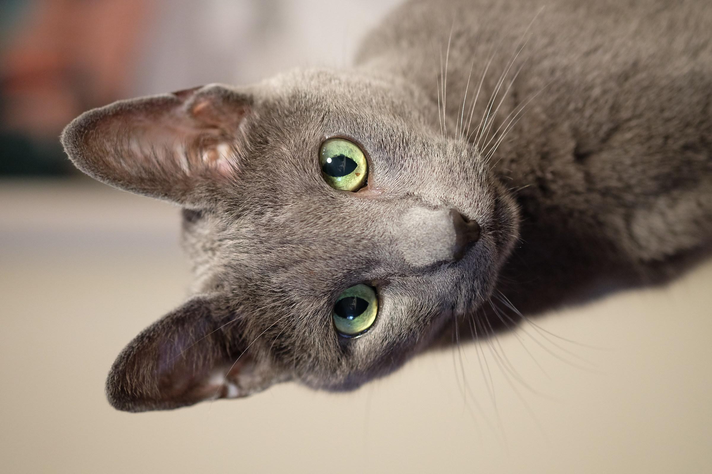 Foreground green eyes...