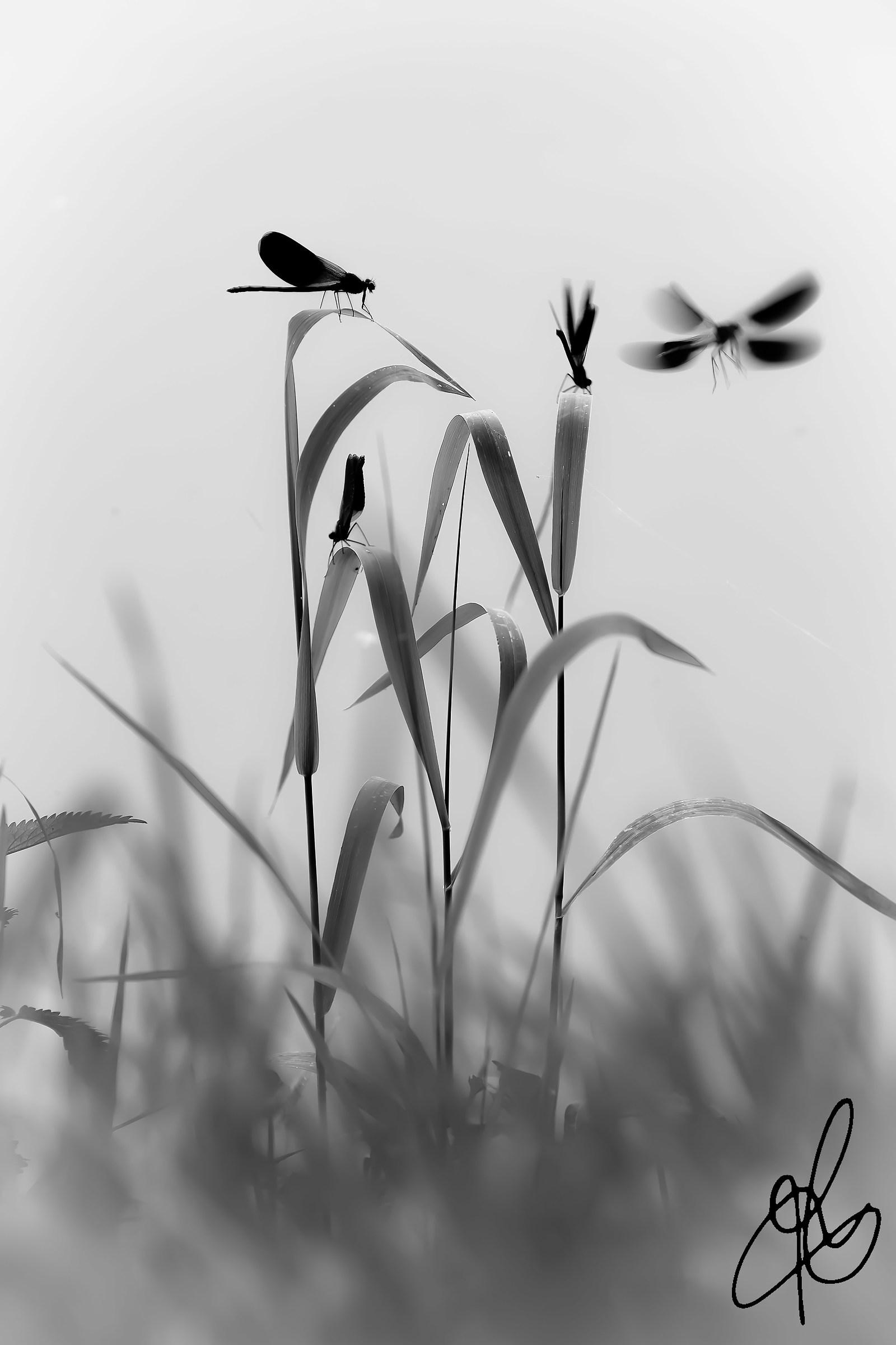 Oasis of dragonflies...