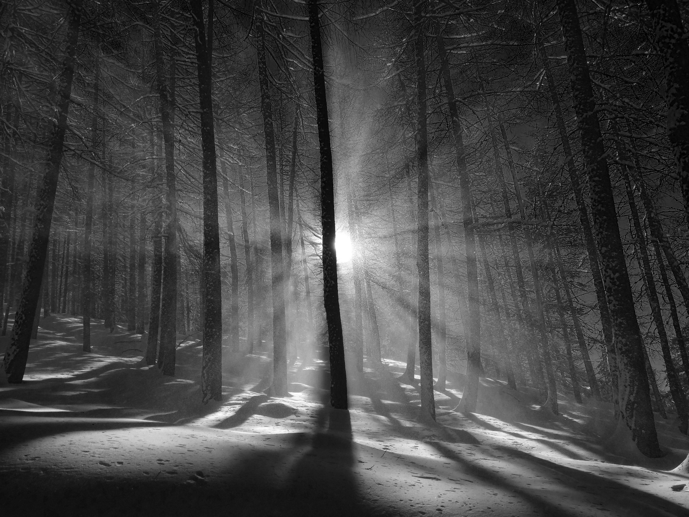 The magic of the forest...